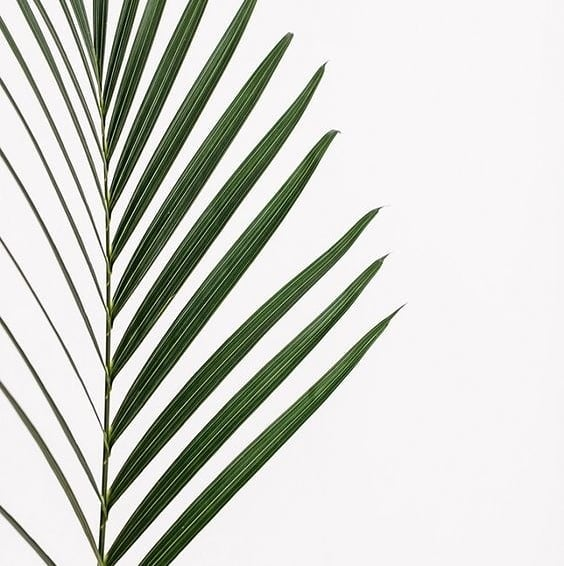 Hello Friday! . . . . . #fridaymood #palm #naturelovers #mood #plants #palms #plantstyling #love #nature #texture #green #colour #interior #furniture #decor #design #style #interiordesign #leaves #life