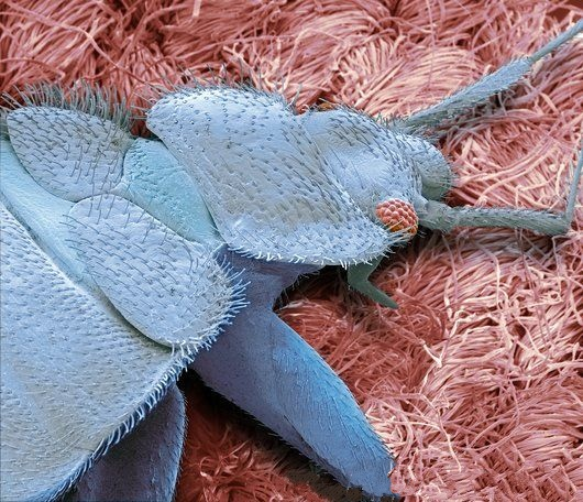 Our Bed Bug inspections utilize the most advanced detection methods available.
