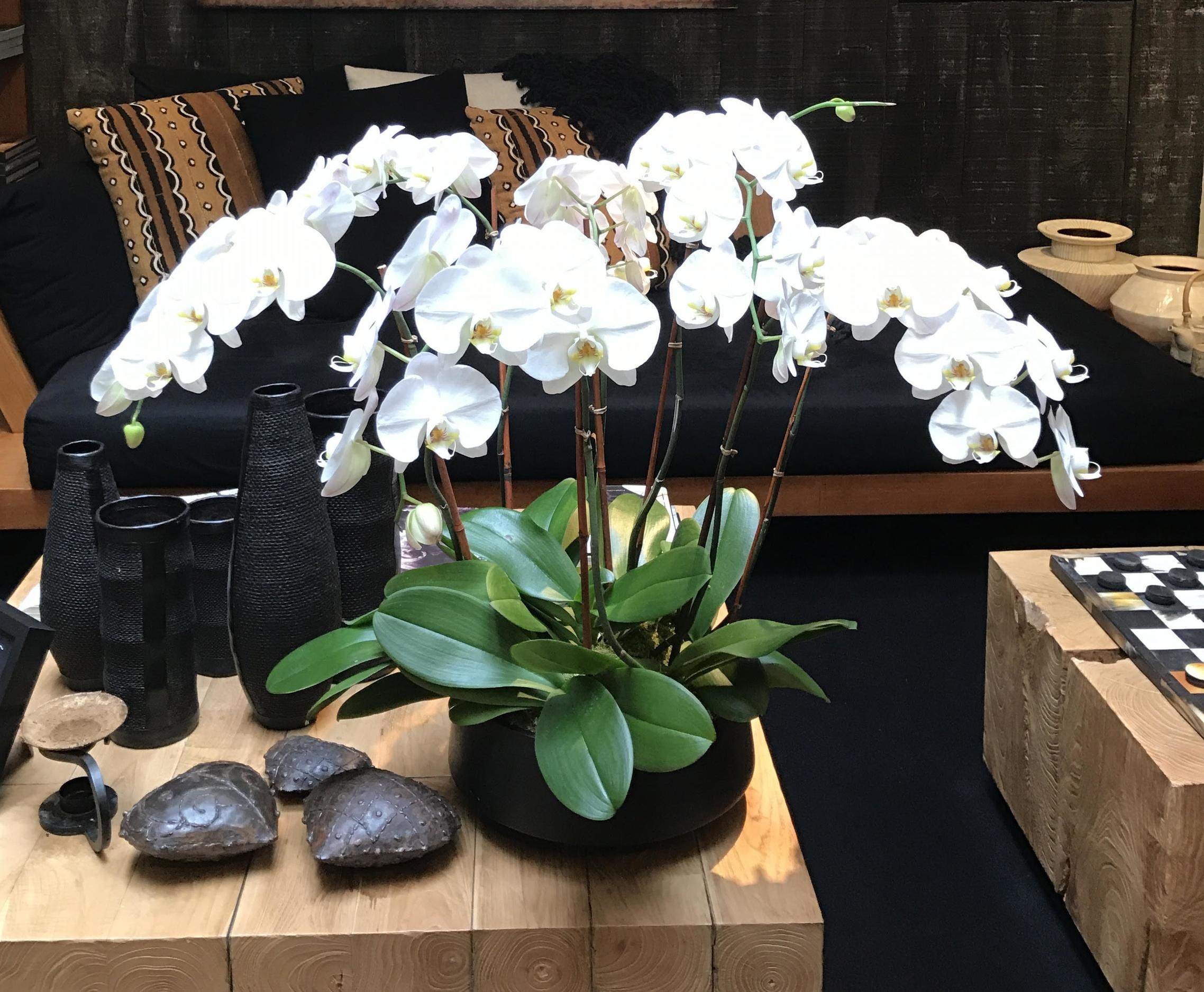 Floreal_orchidpic3.jpg