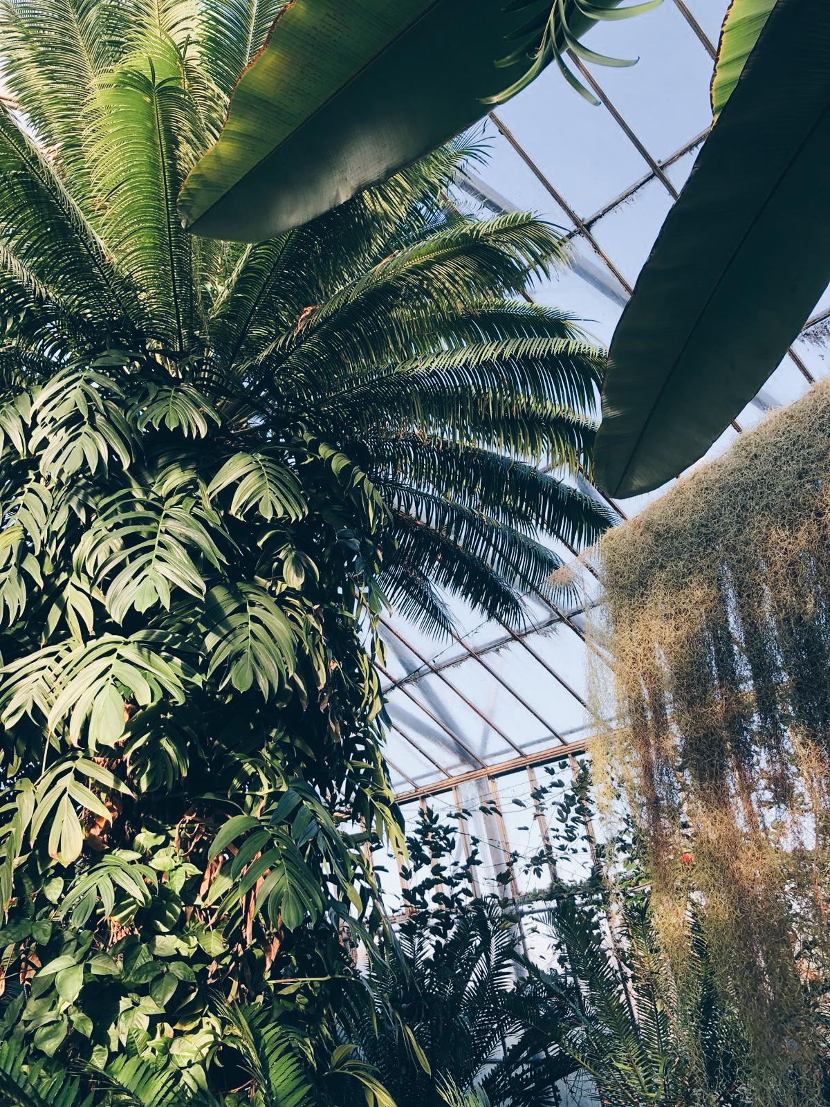 royal botanics edinburgh