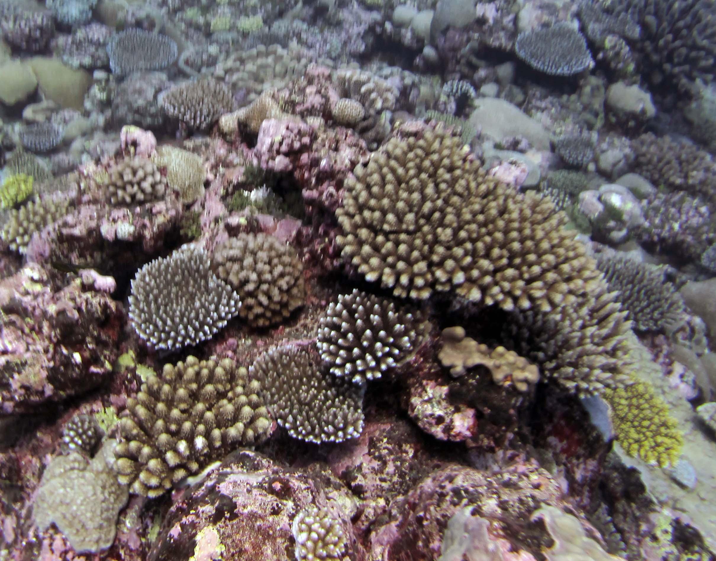 Tubuai Austral Islands.jpg