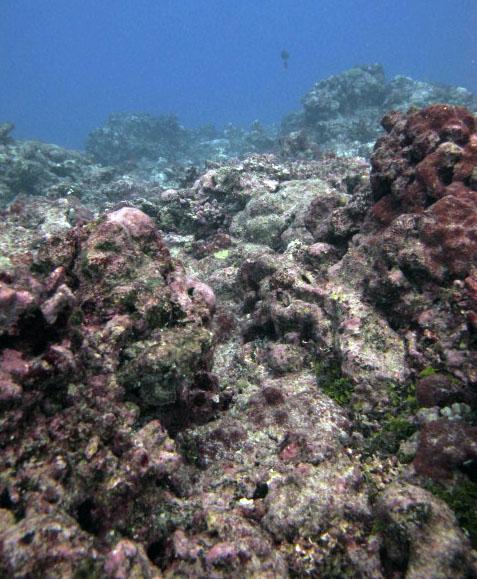 AURR20 (n=3 colonies sampled)