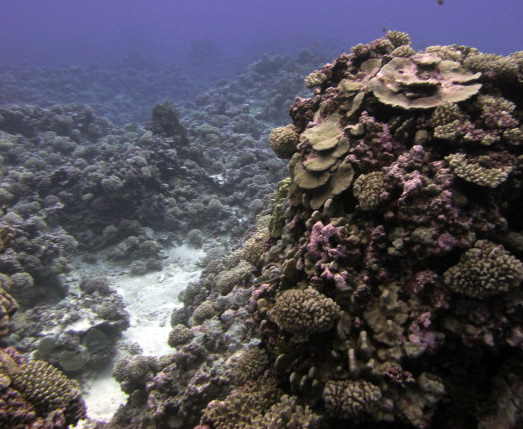 amazing coral of Maria.jpg
