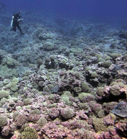 pastel reef.jpg