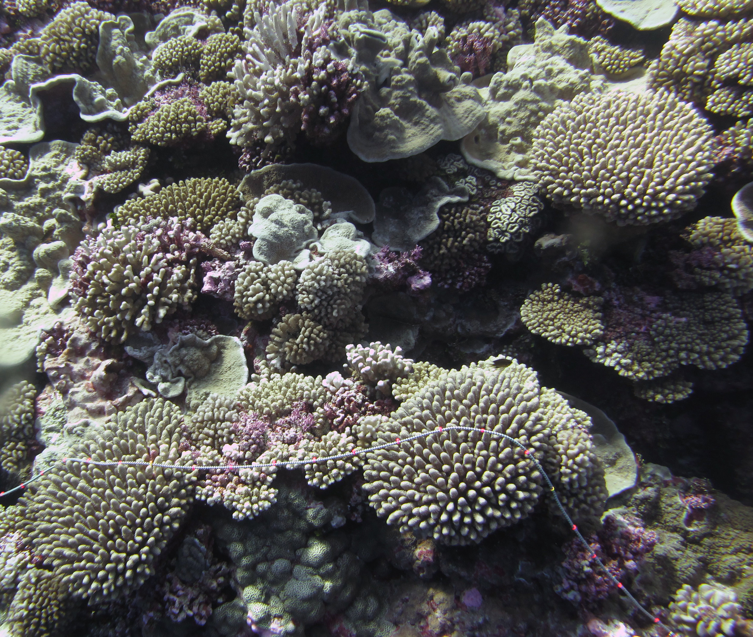 coral-rich transect.jpg