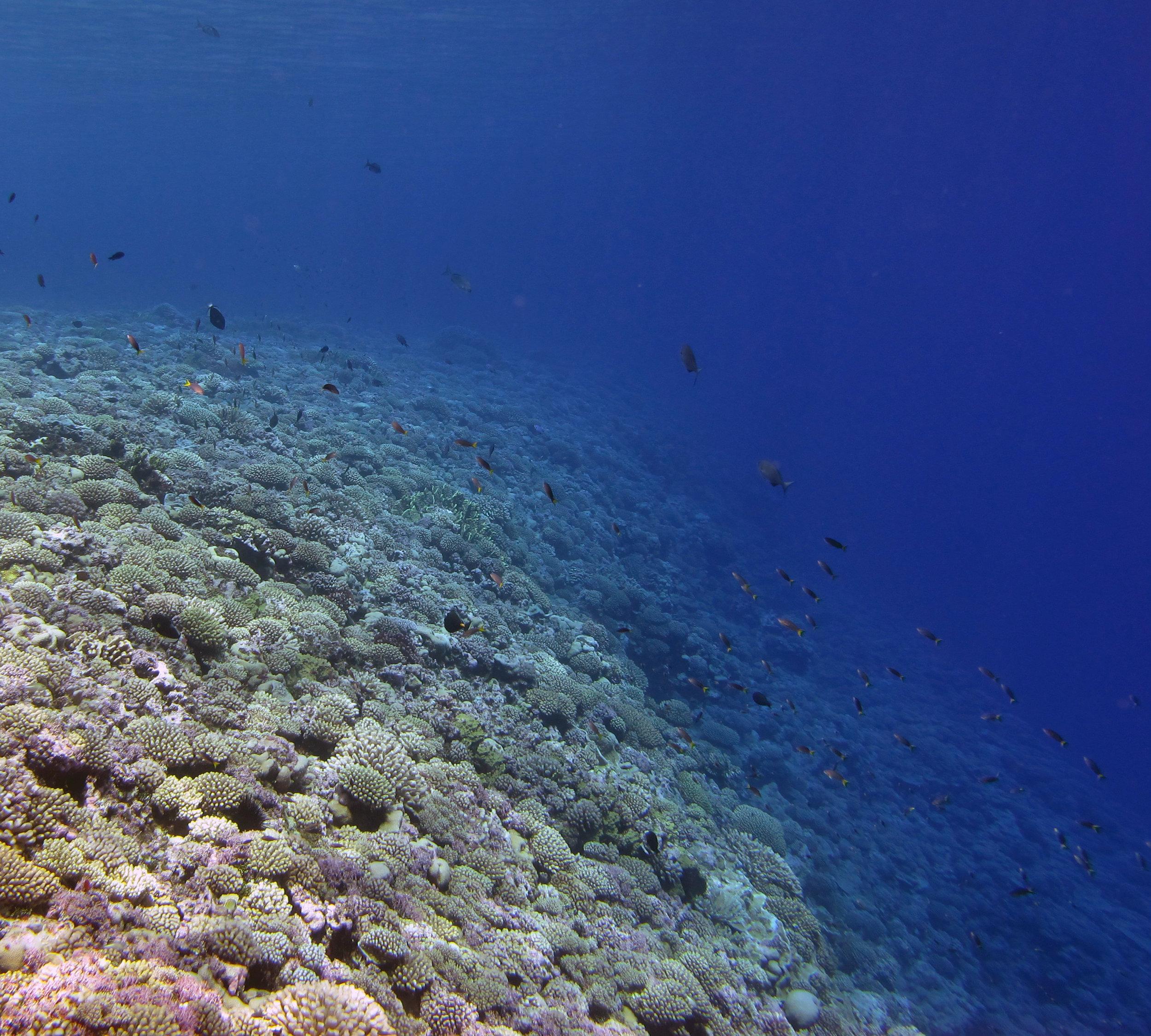last dive at Maria.jpg