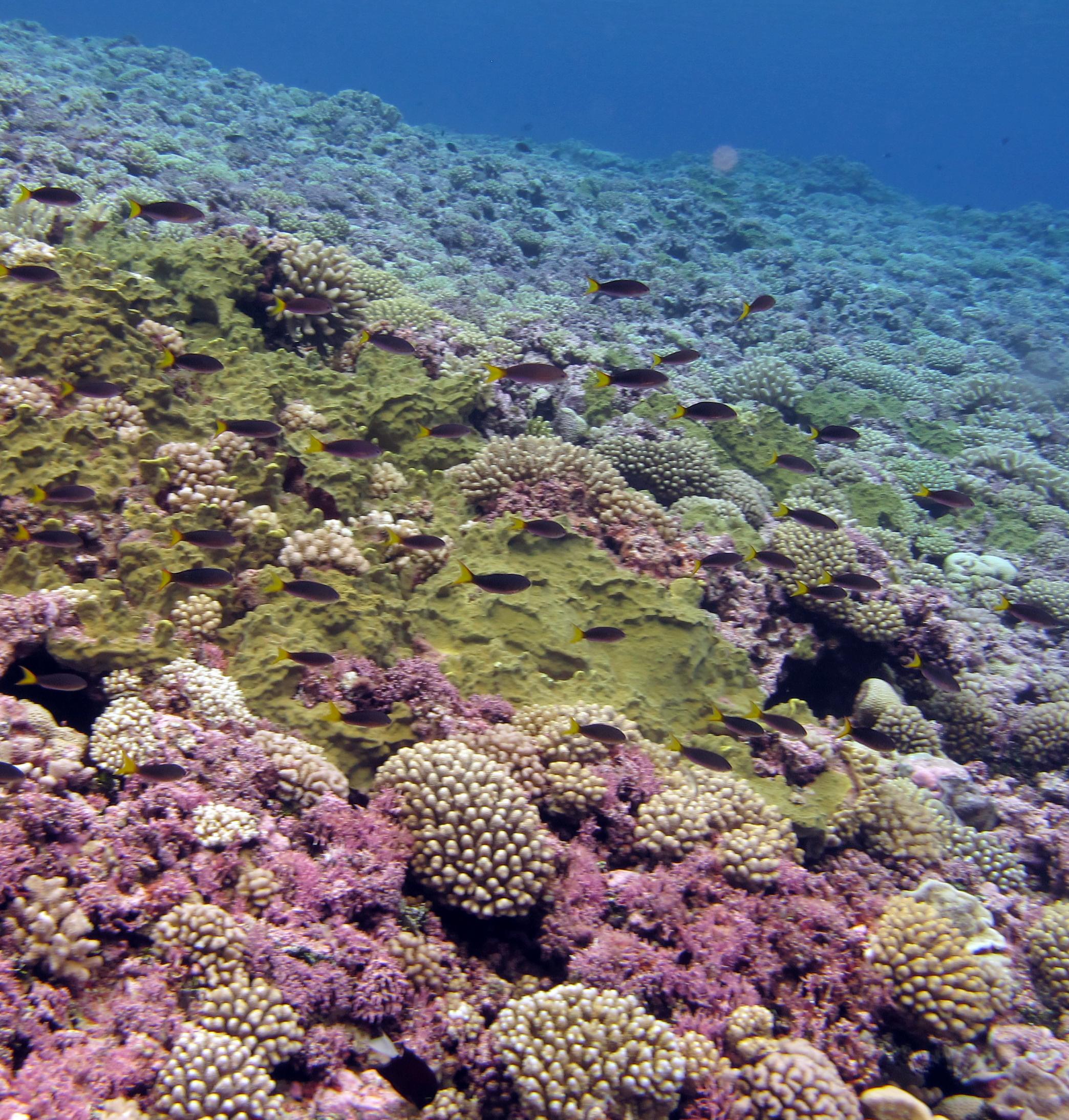 pastel FP reefs.jpg