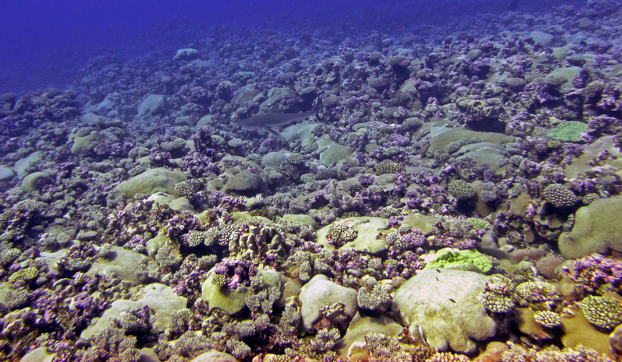 Cook Islands   (April-May, 2013):  field report  and  manuscript describing sampled corals and some environmental data . The second manuscript describing the molecular biology of the sampled coral colonies can be found  here .