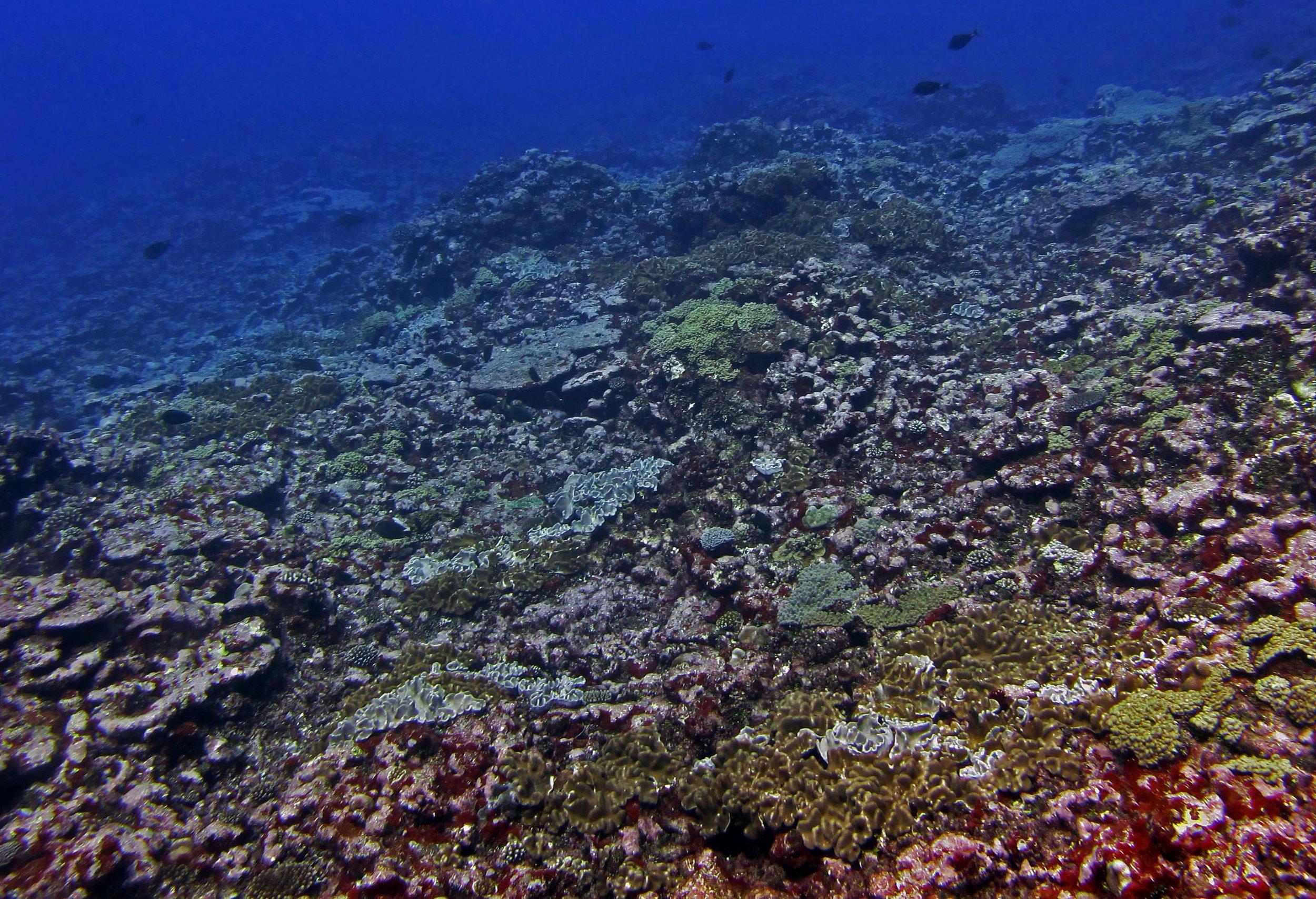 recovering reef.jpg