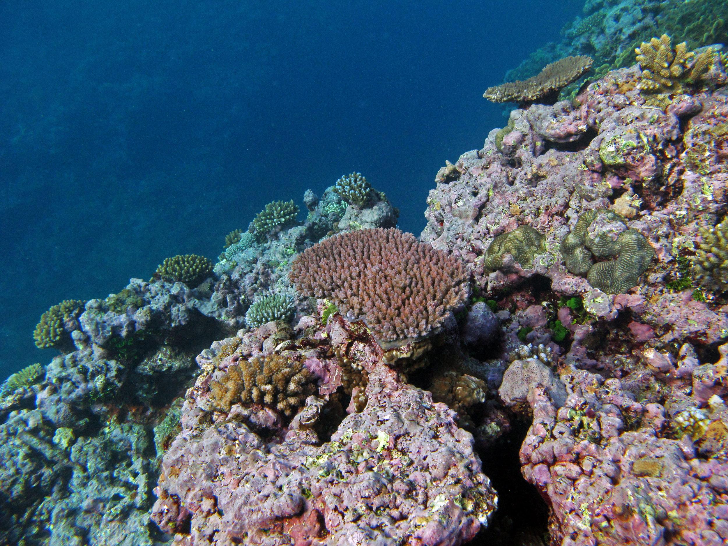 CCA in Fiji.jpg