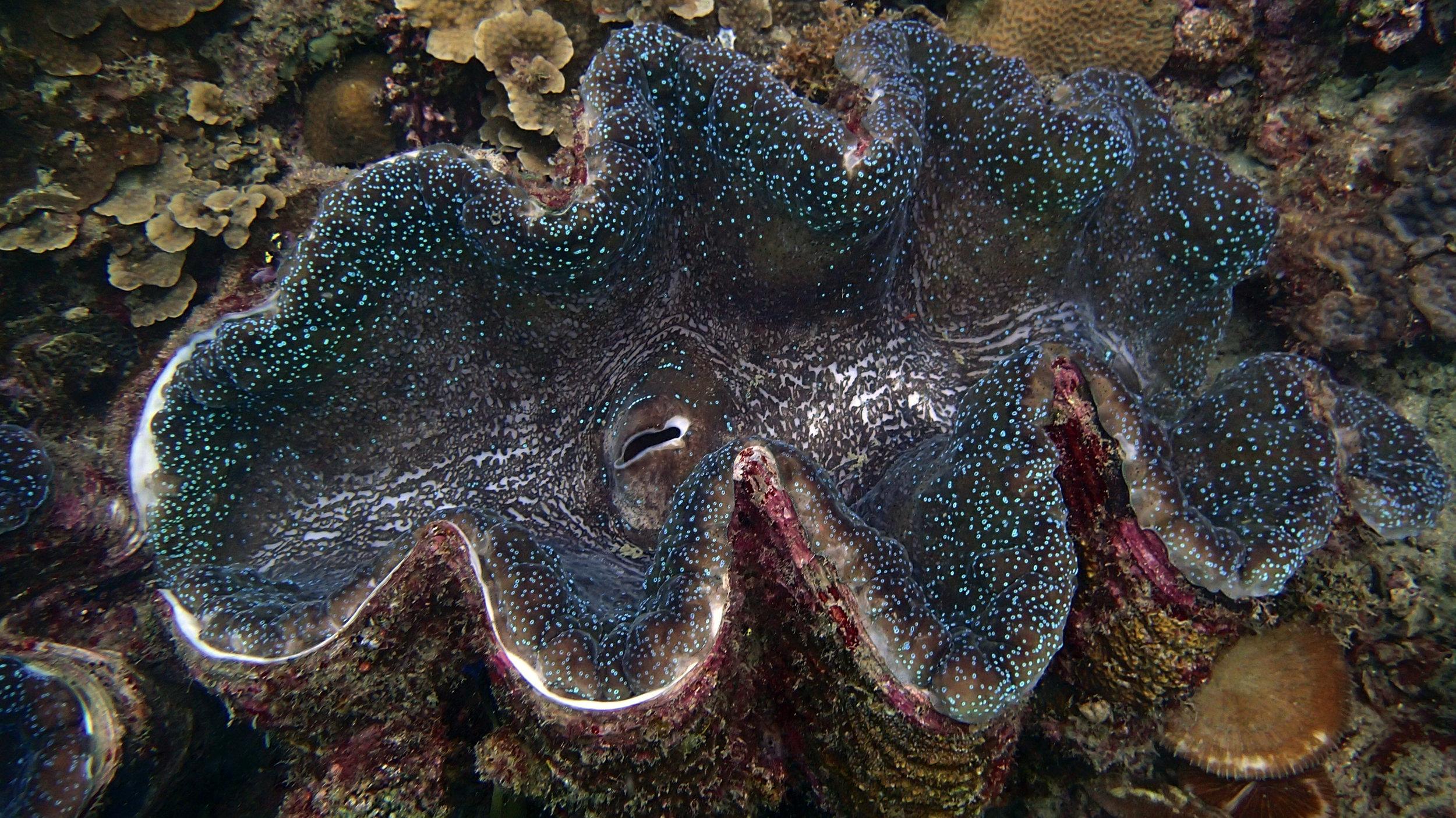monster clam.jpg