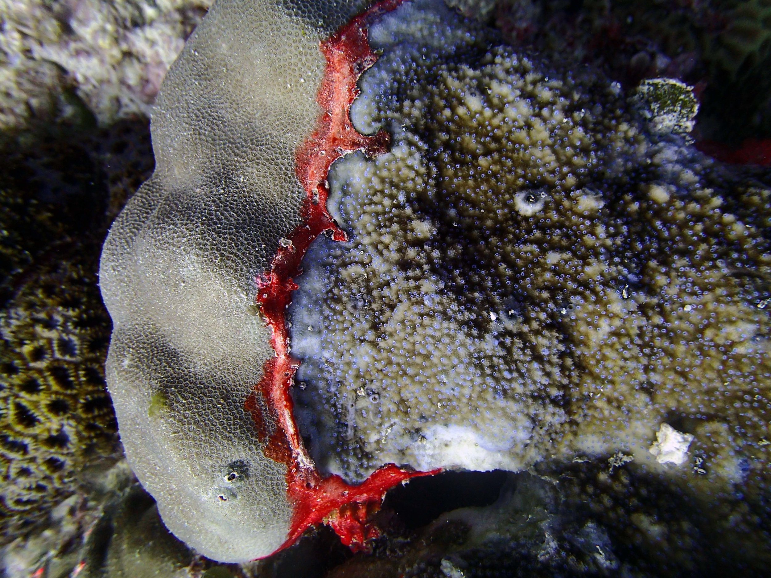 coral competition.jpg