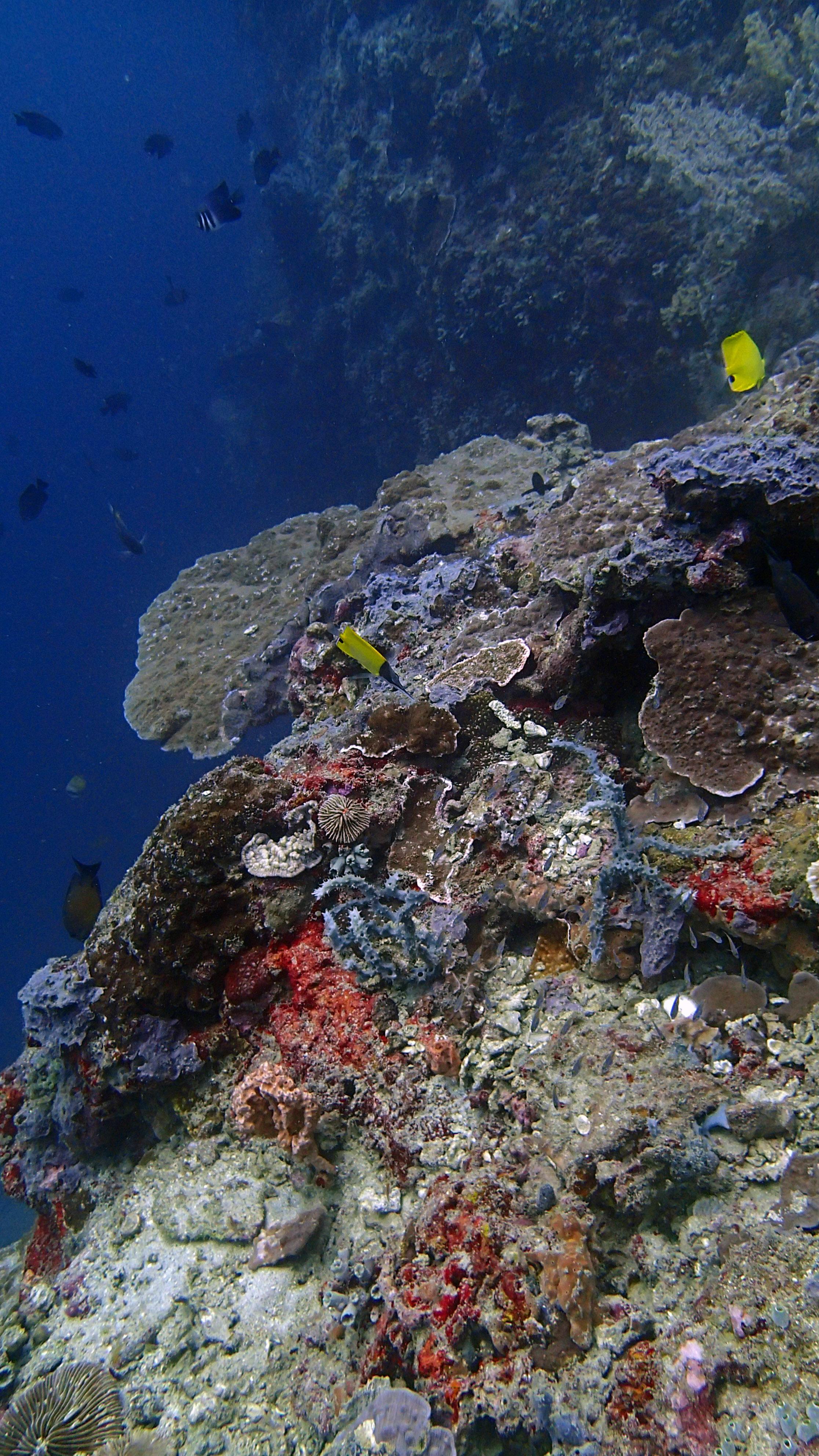 beautiful Anilao diving.jpg
