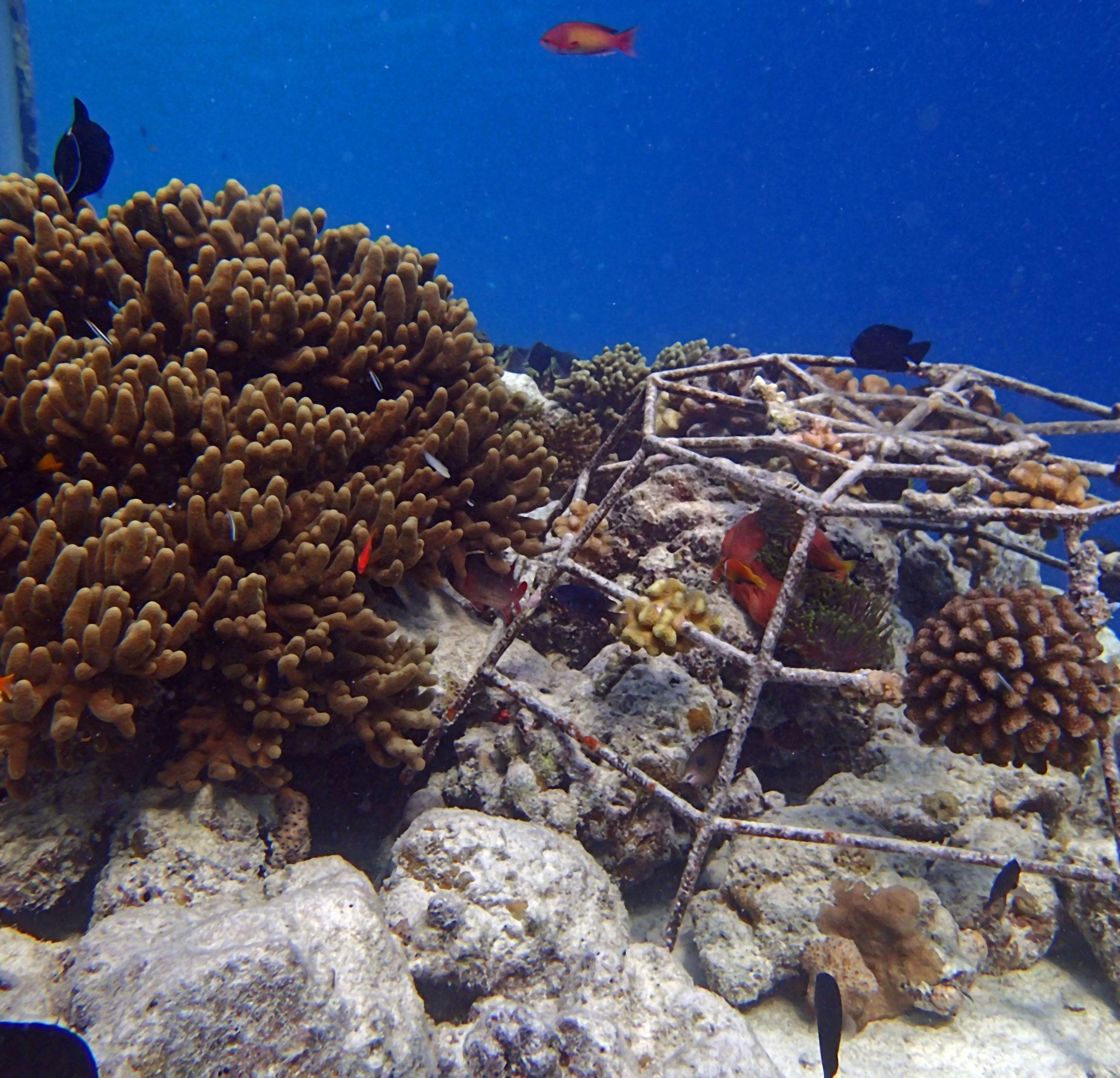 manicured coral garden.jpg