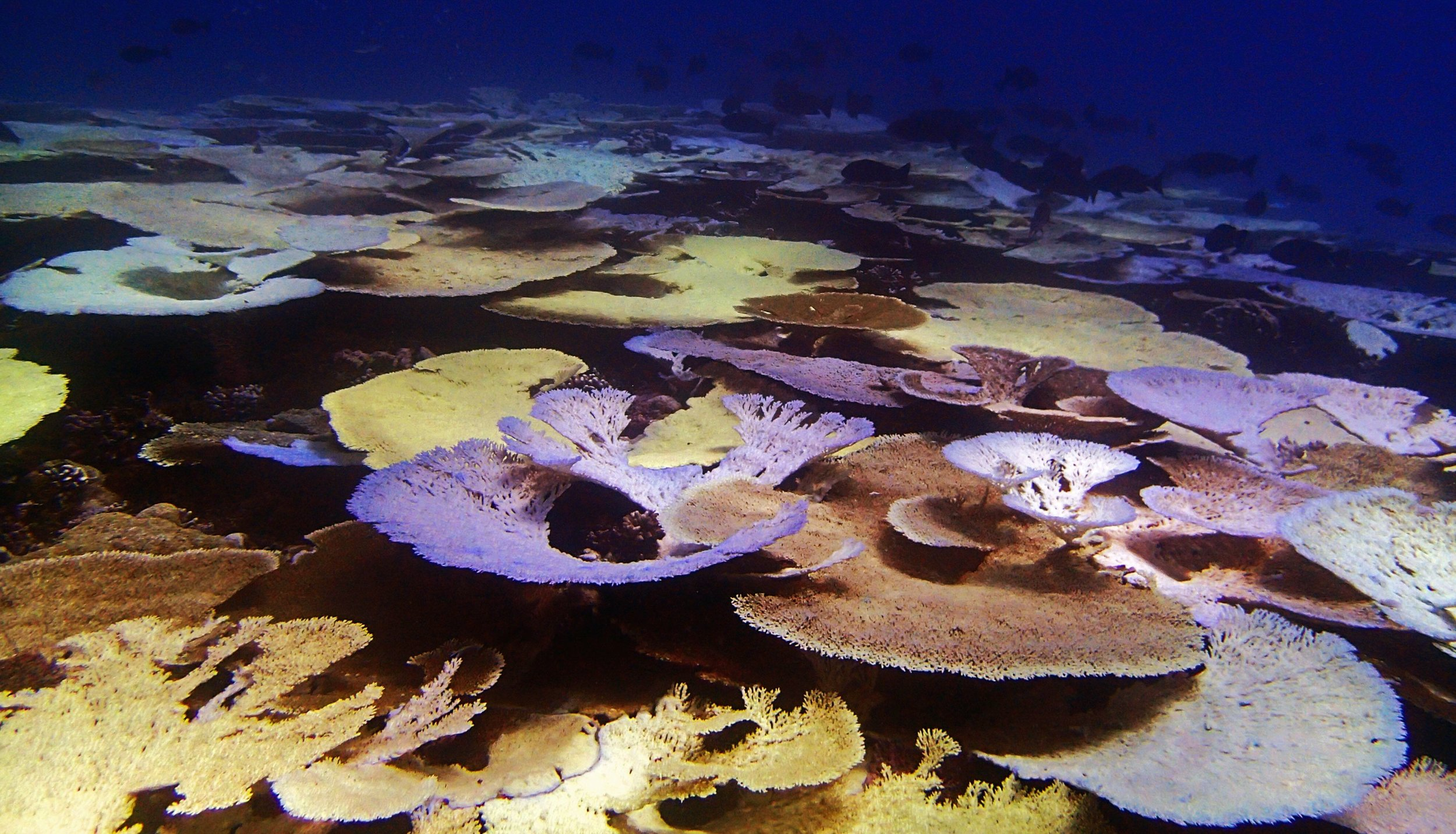 110% coral cover.jpg