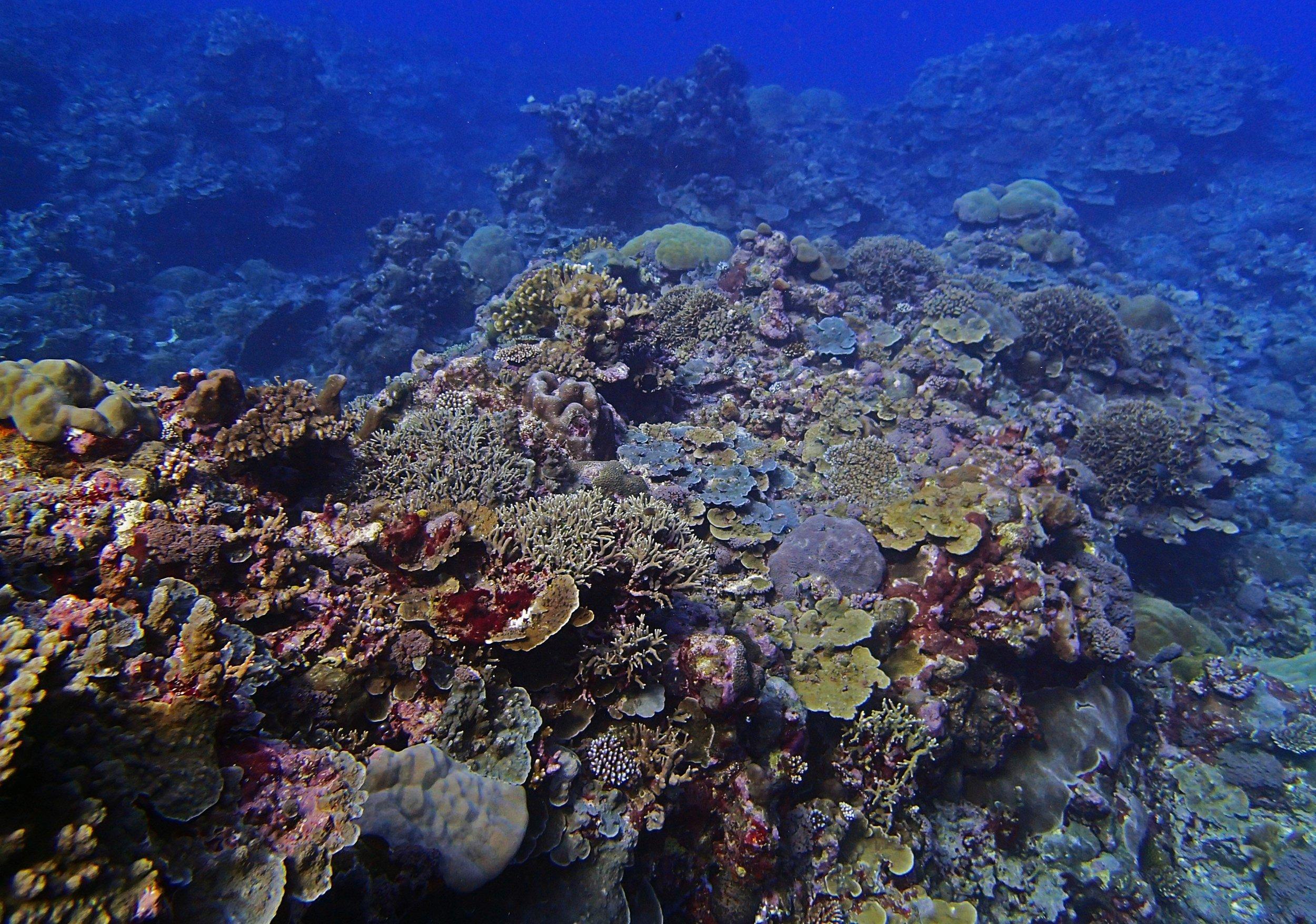 coral spur.jpg