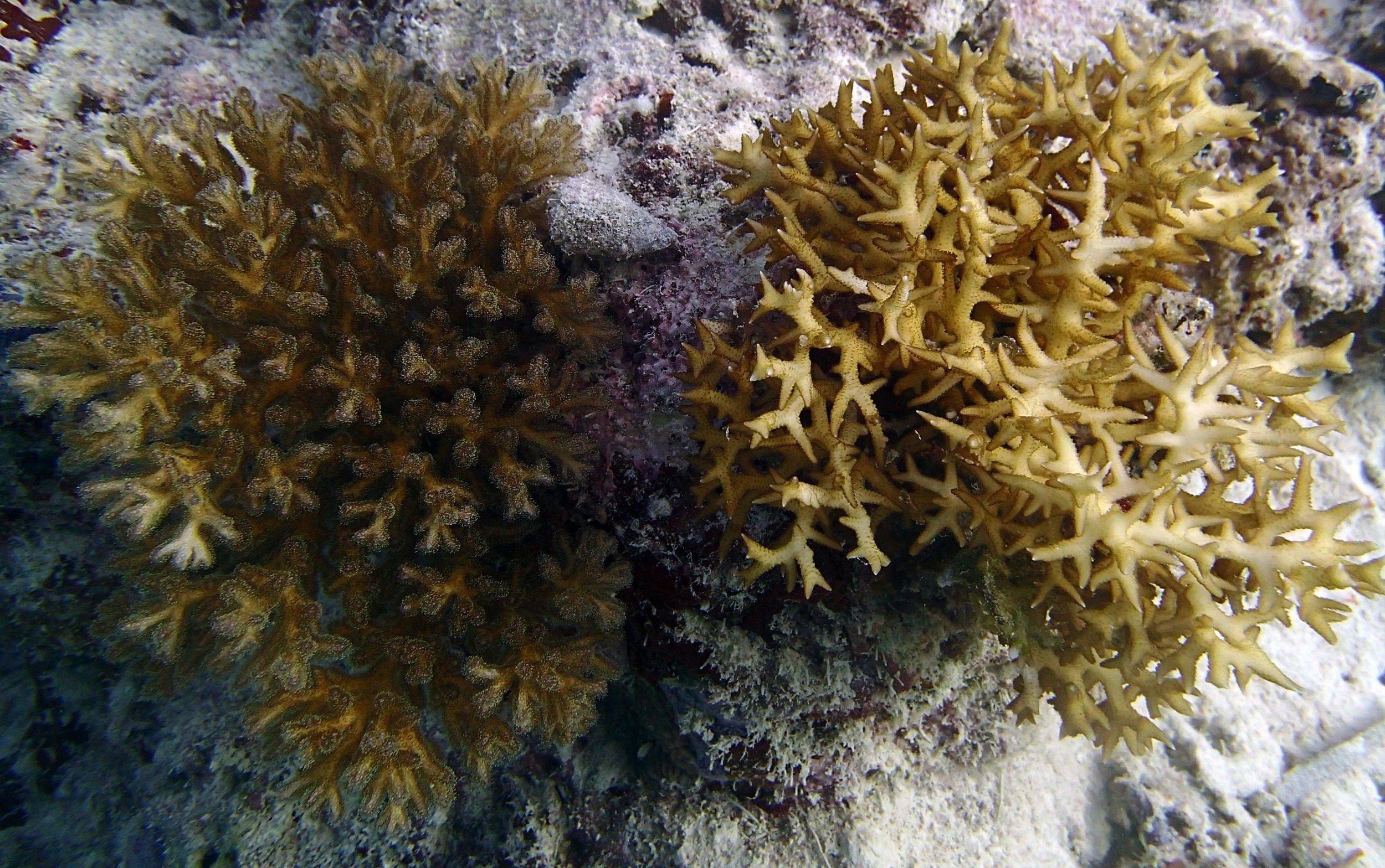 model corals.jpg