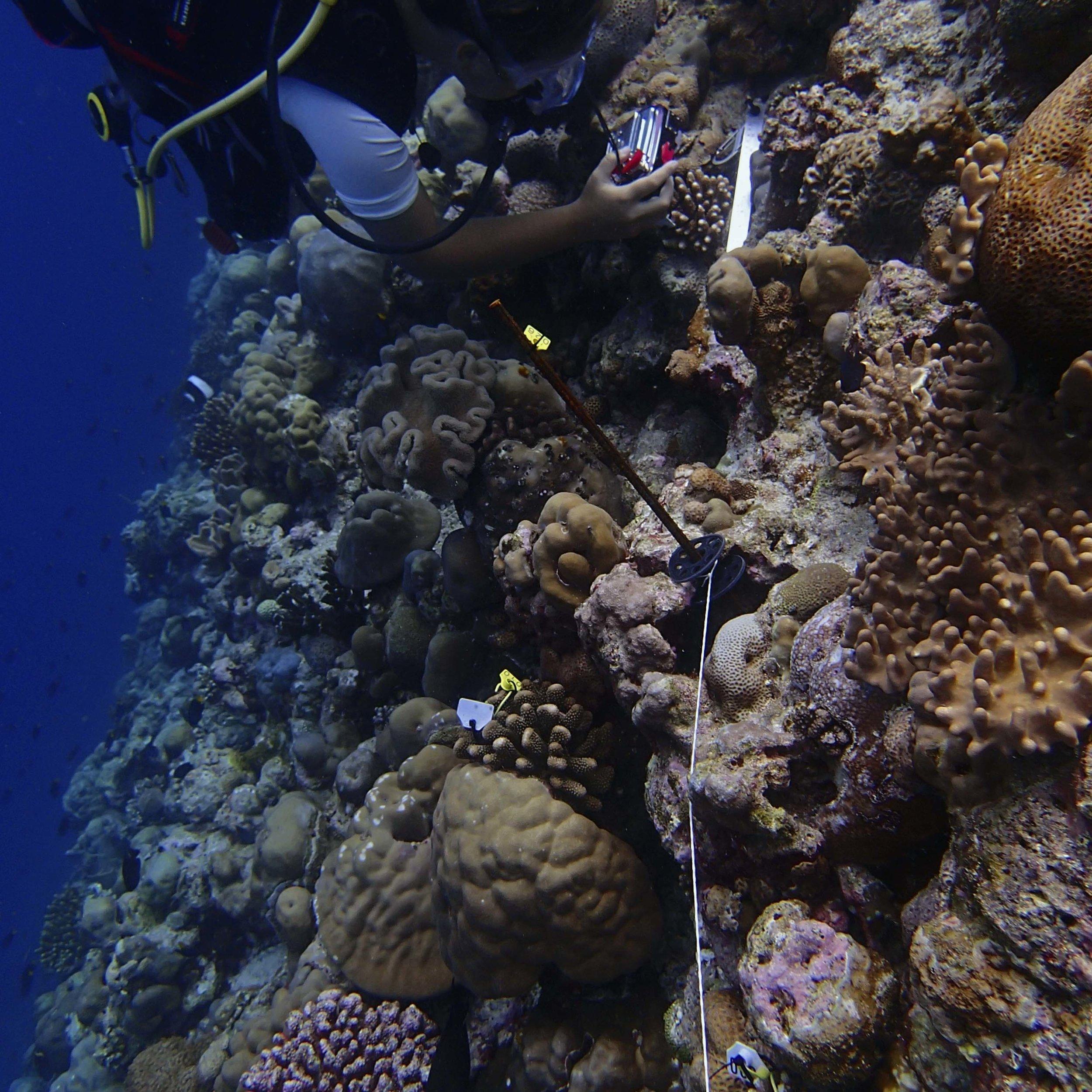 reef ecology.jpg