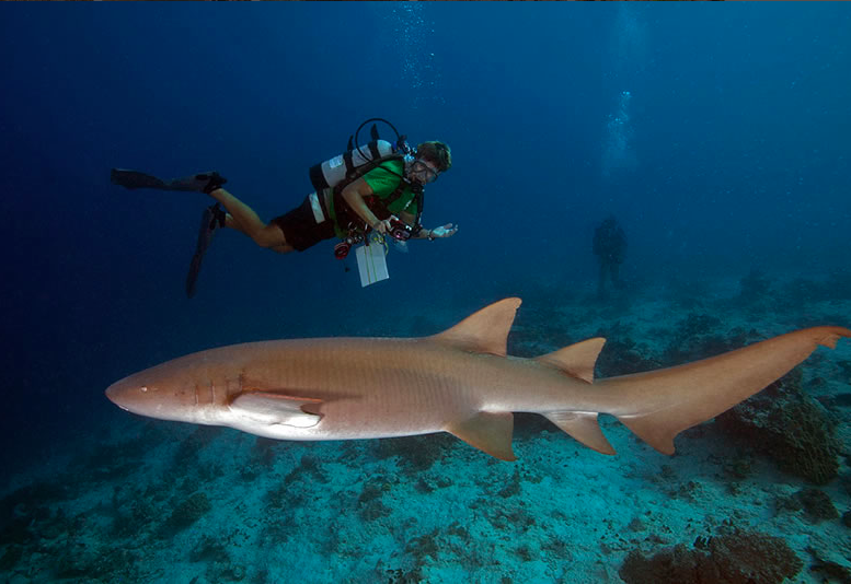 me and nurse shark.png