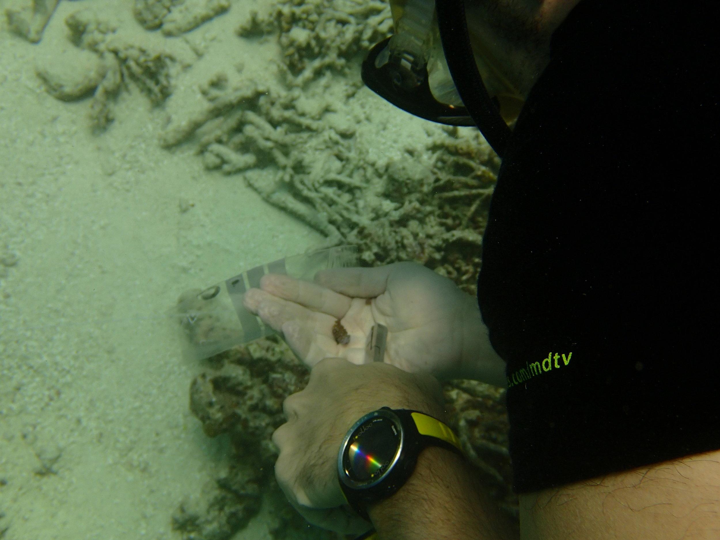 sampling a coral.JPG