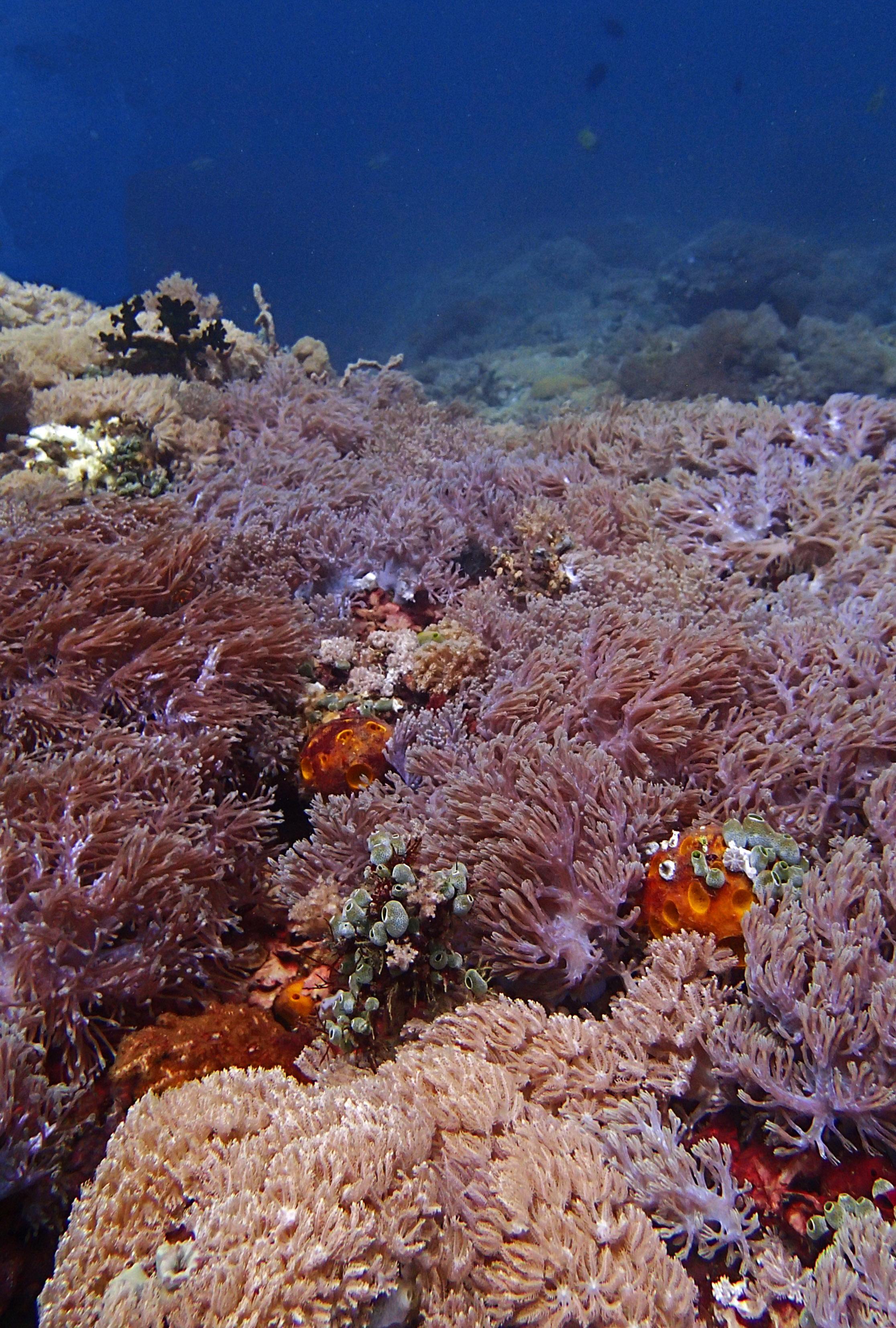 amazing soft corals.jpg