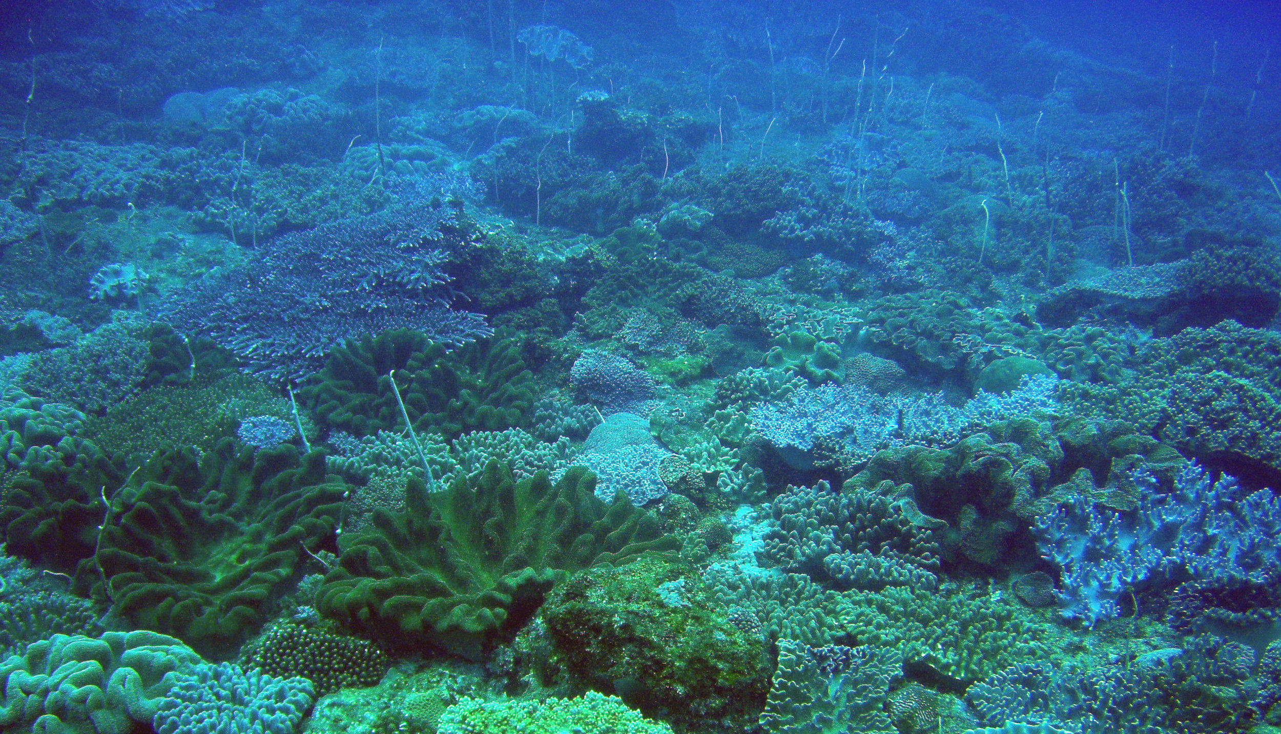 coral diversity.jpg