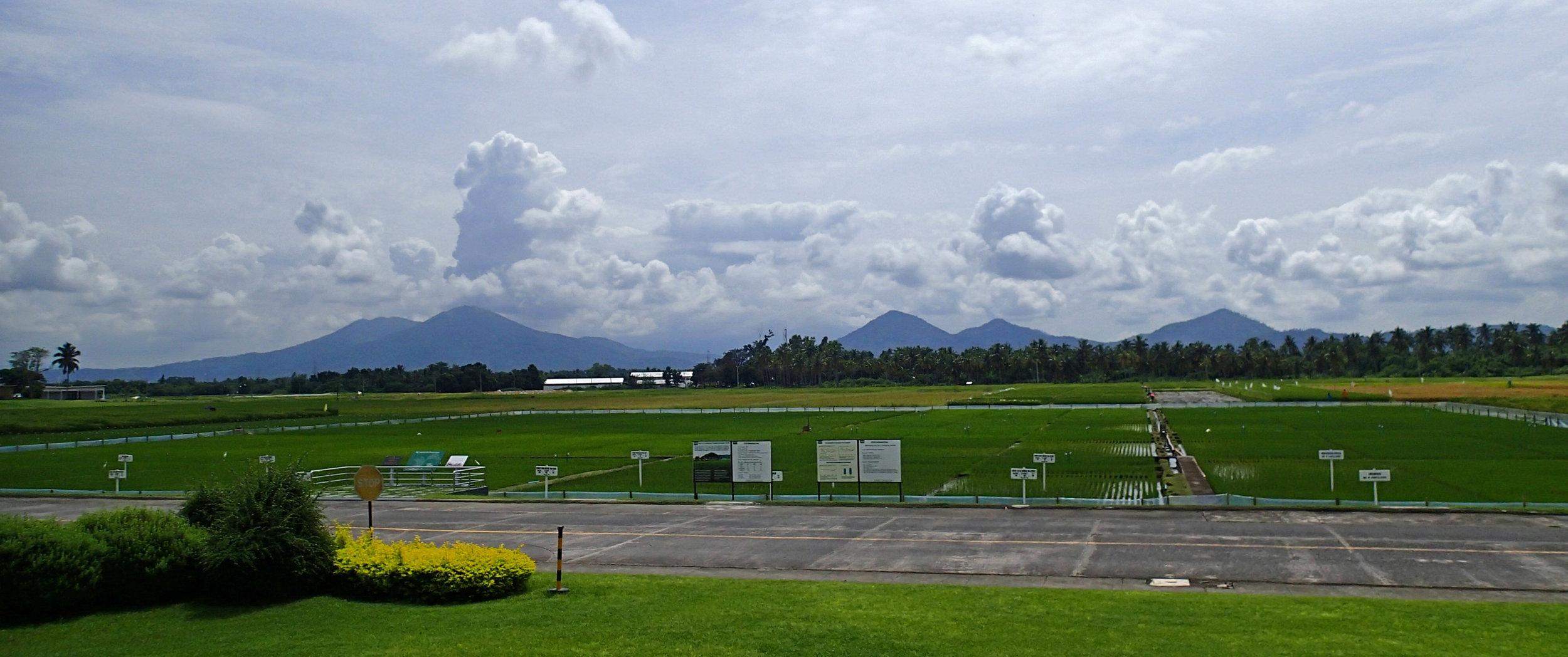 experimental rice fields.jpg