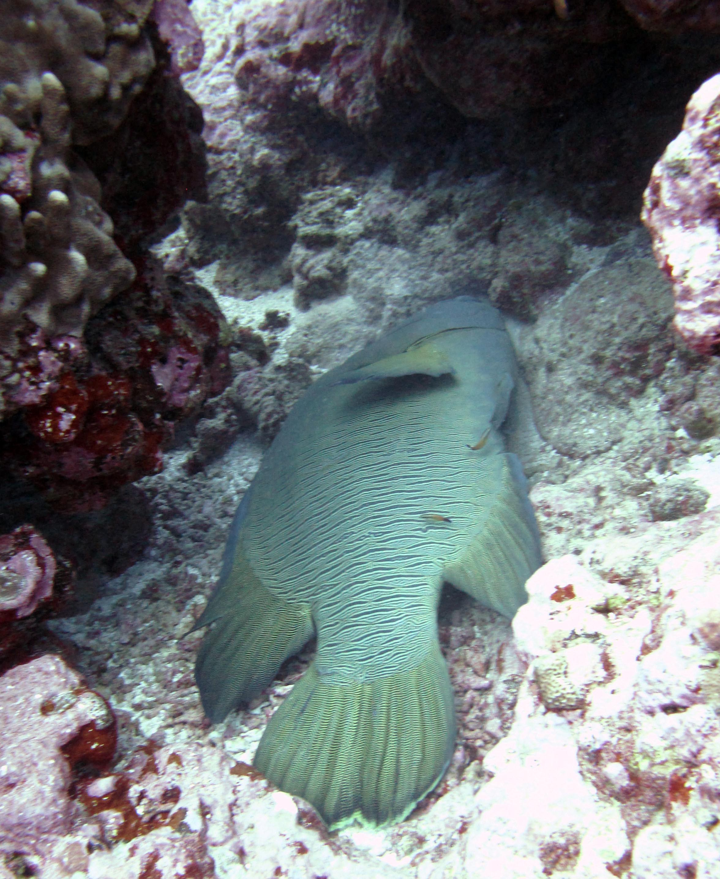 wrasse cleaning station.jpg