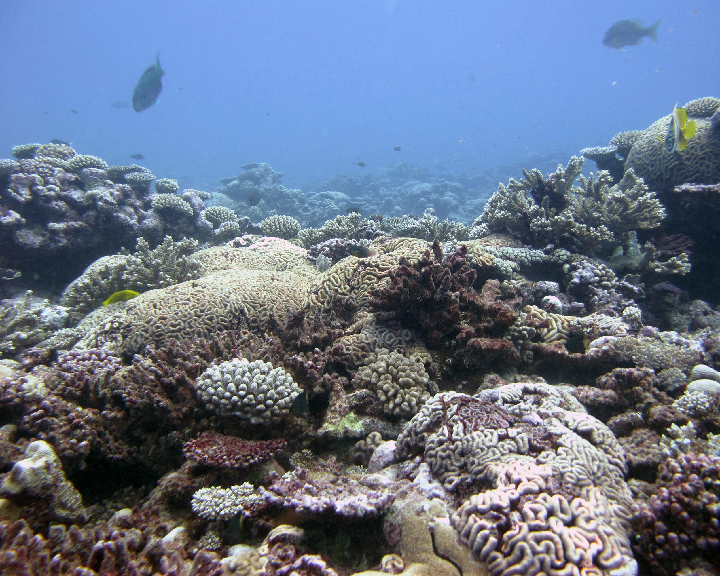 COTS-free reef.jpg