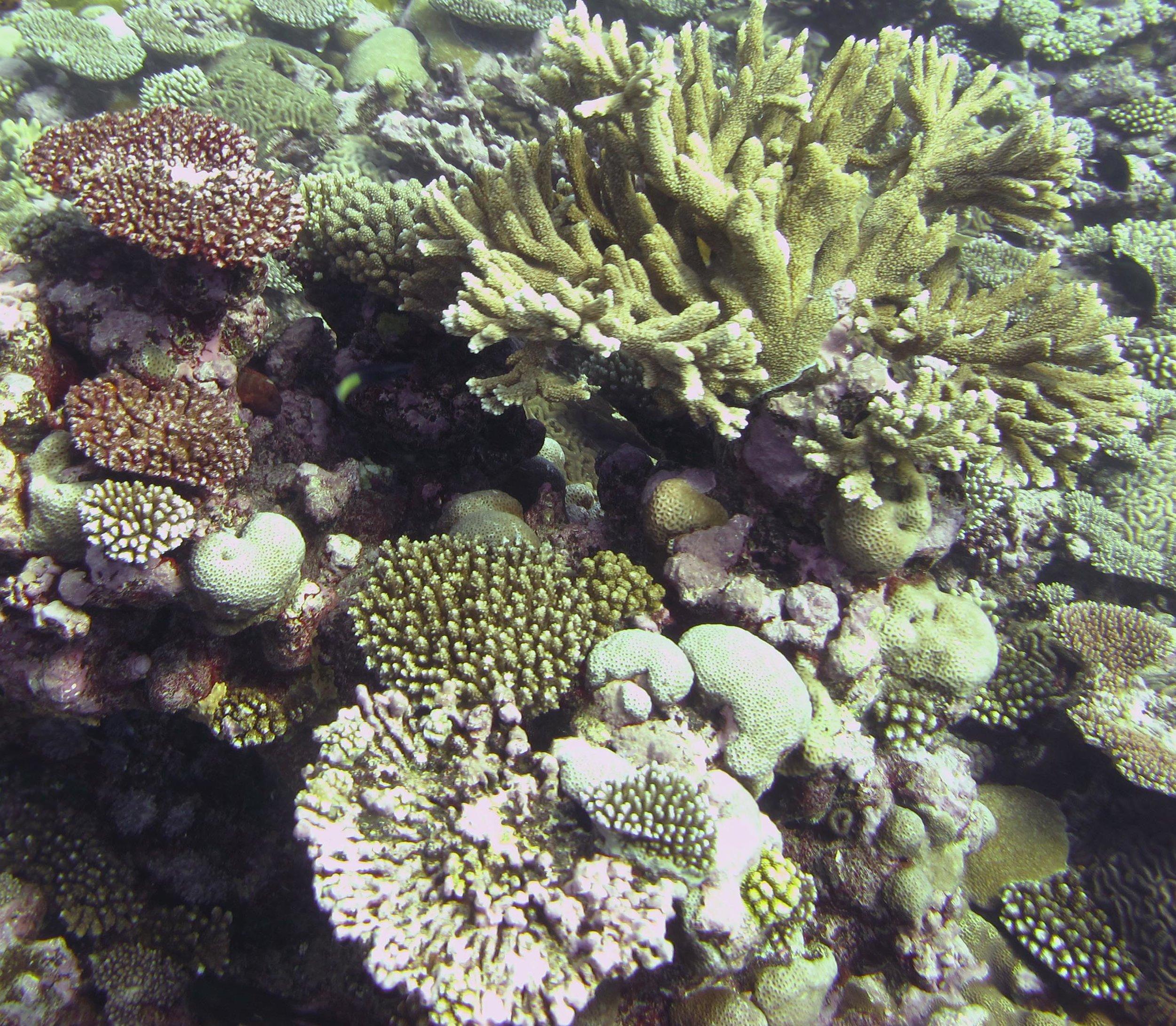 nice coral garden.jpg