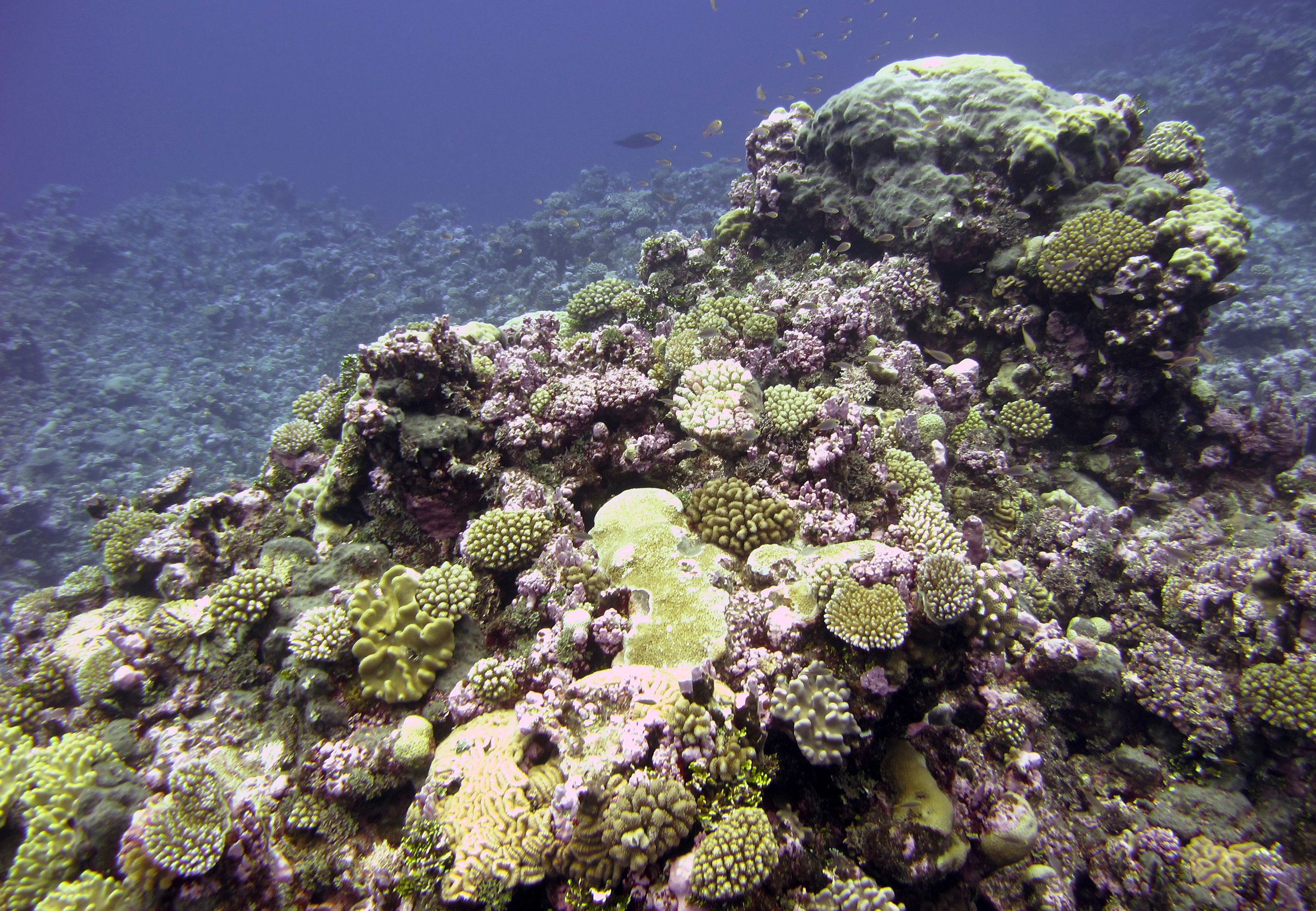 spectacular pillar of coral.jpg