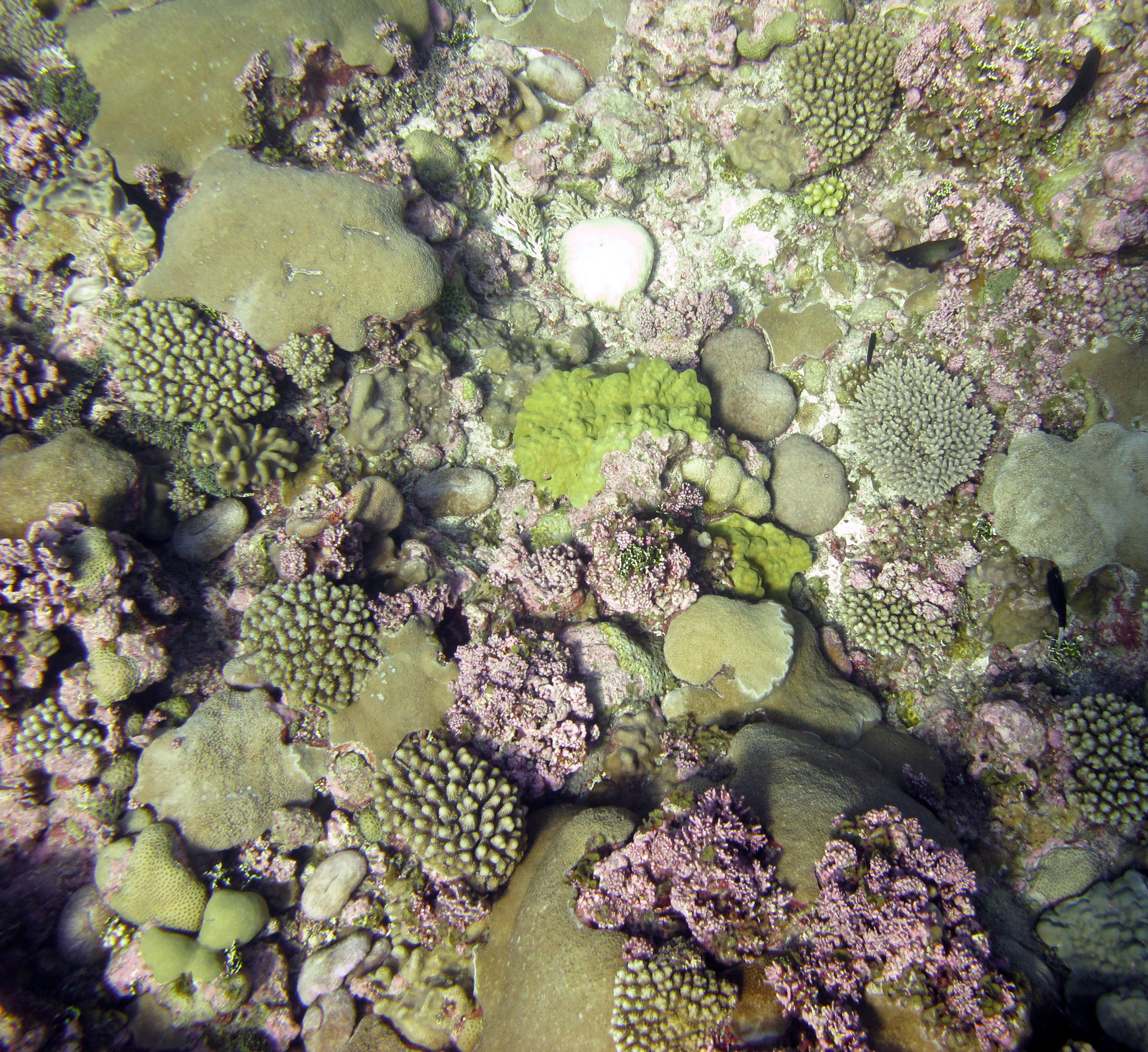 beautiful Palmerston reefs.jpg