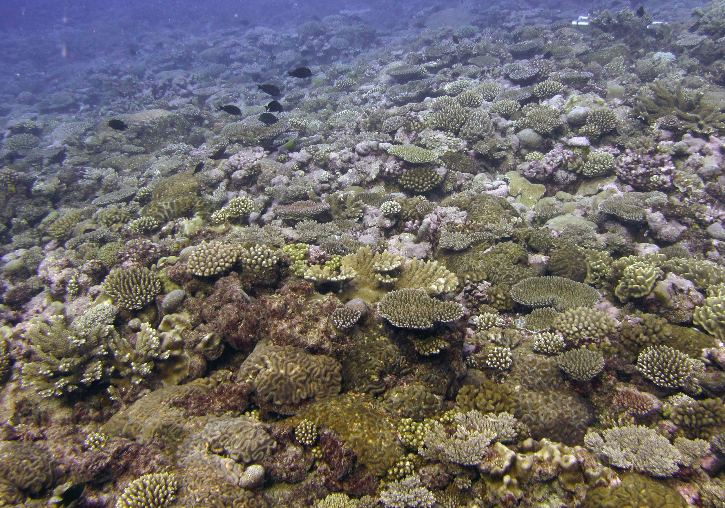 100% coral cover.jpg