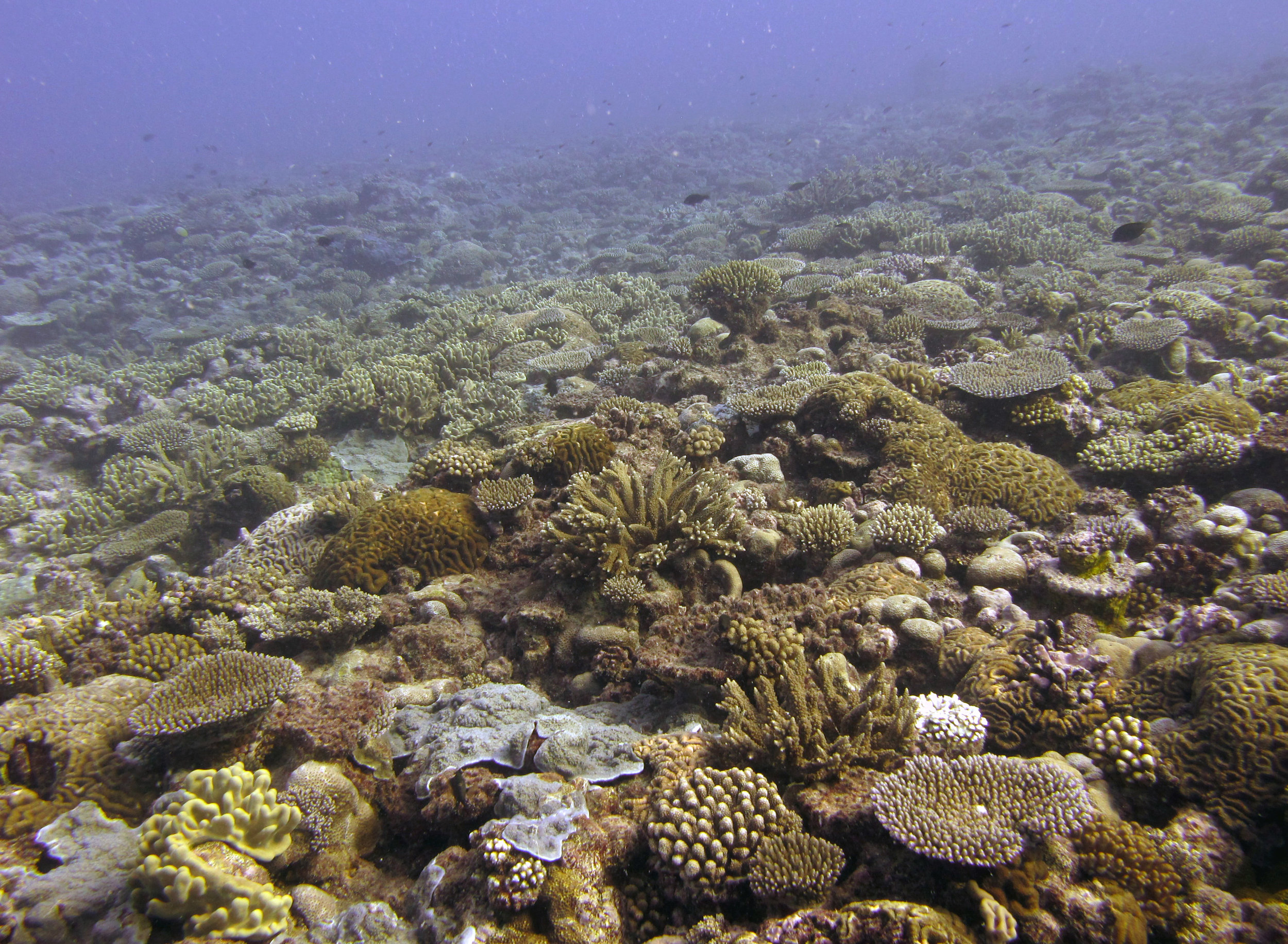 crazy coral cover.jpg