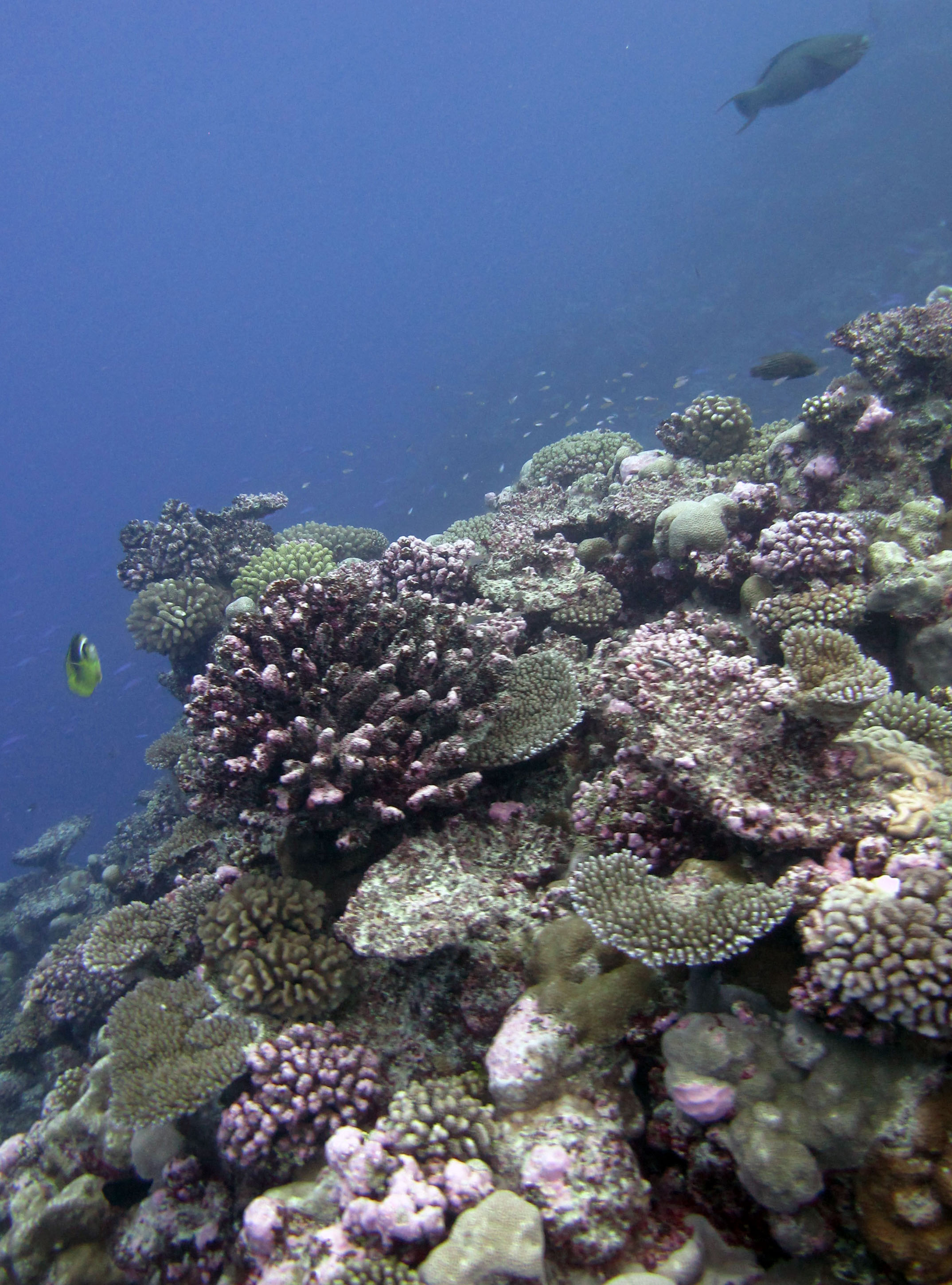 beautiful Palmerston reef.jpg