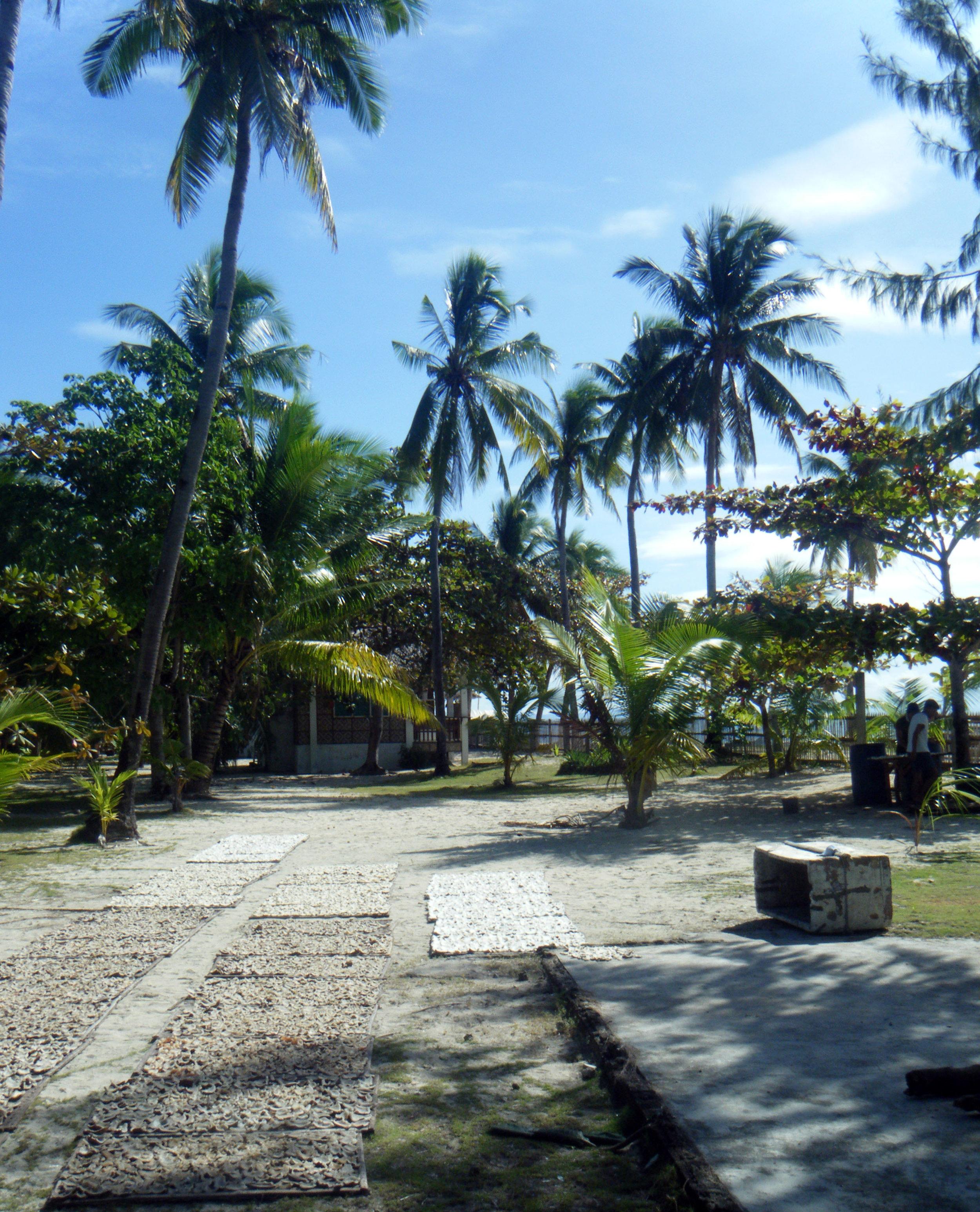 drying coconuts.jpg