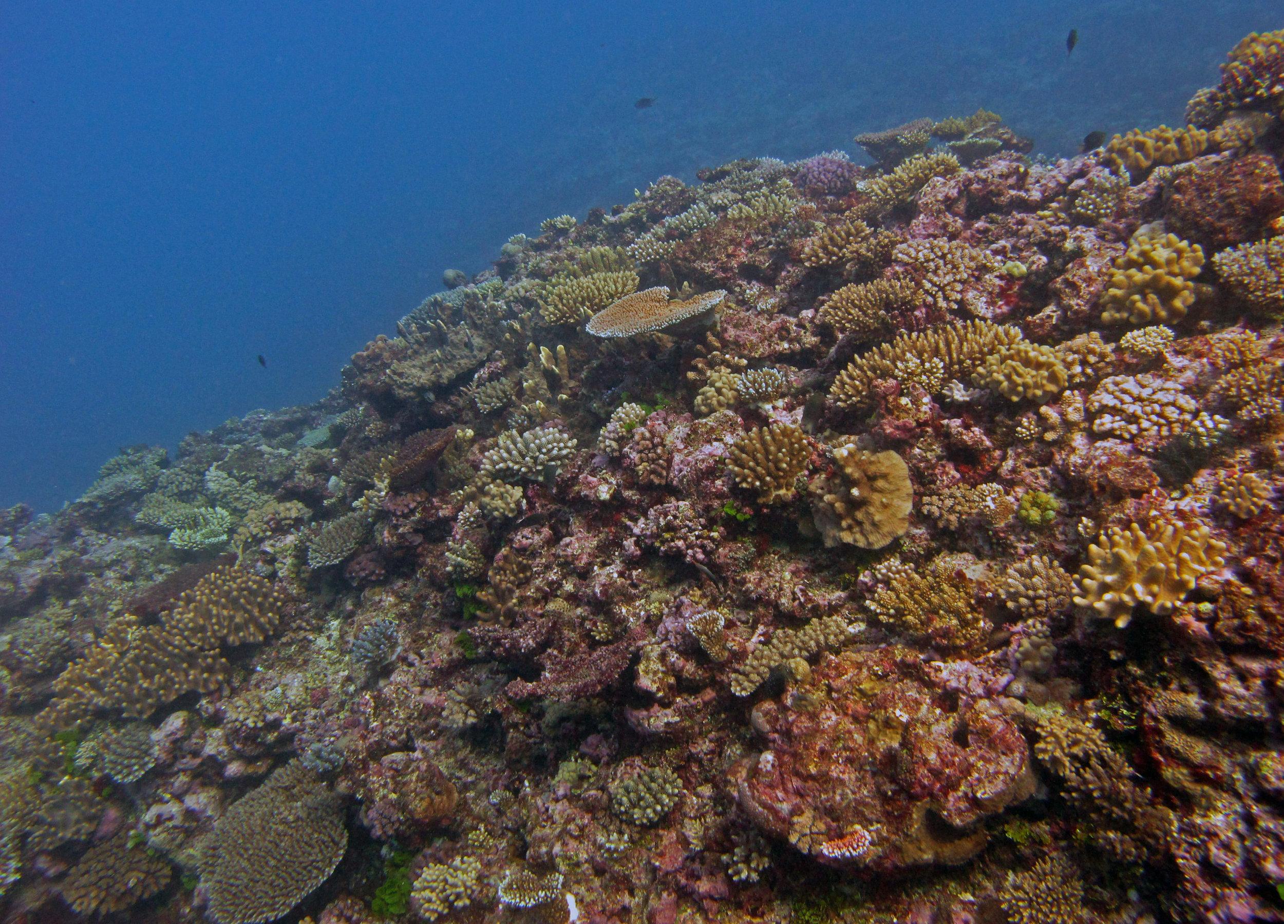 2nd dive of trip.jpg