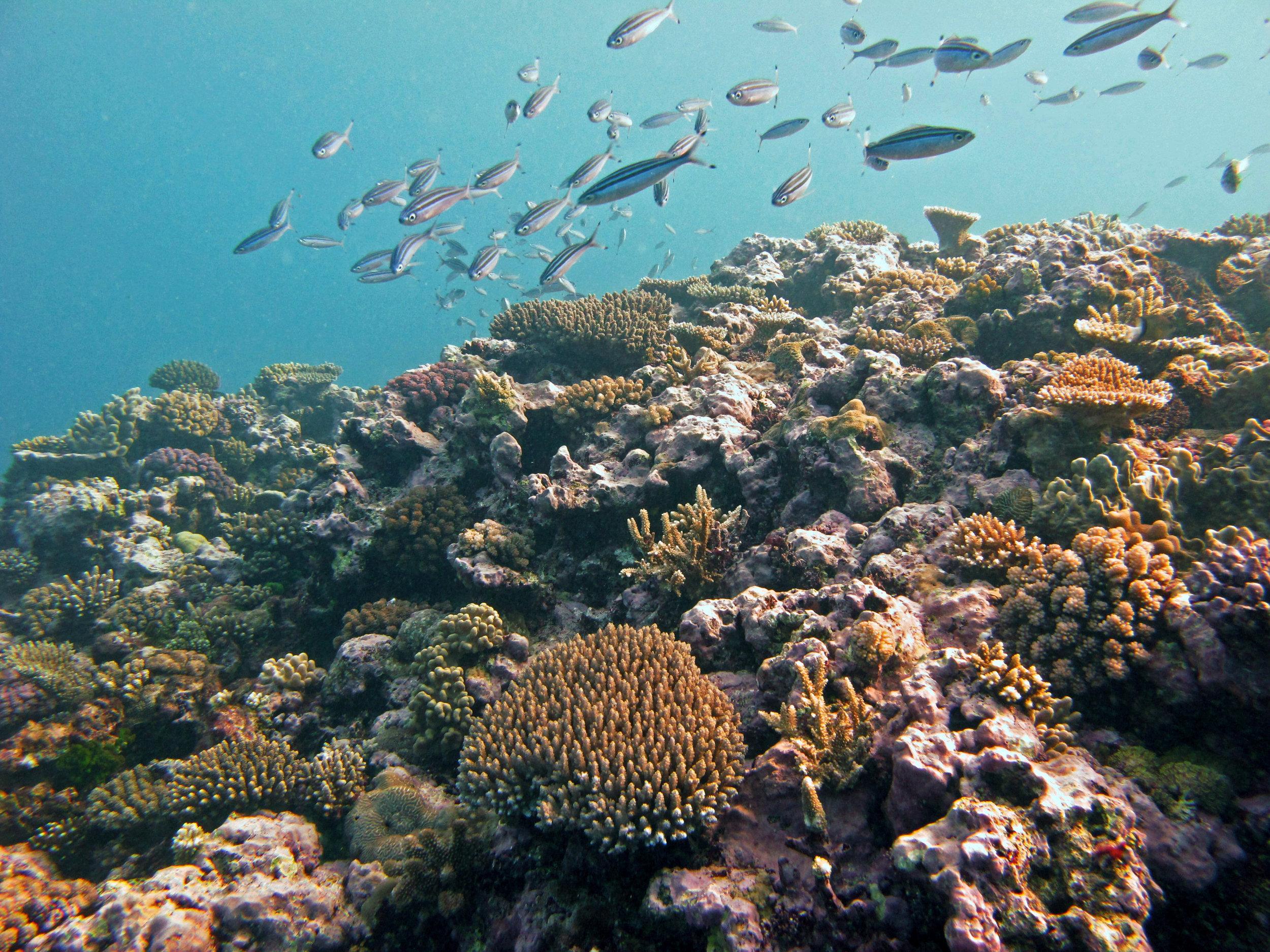 2nd dive in Fiji.jpg