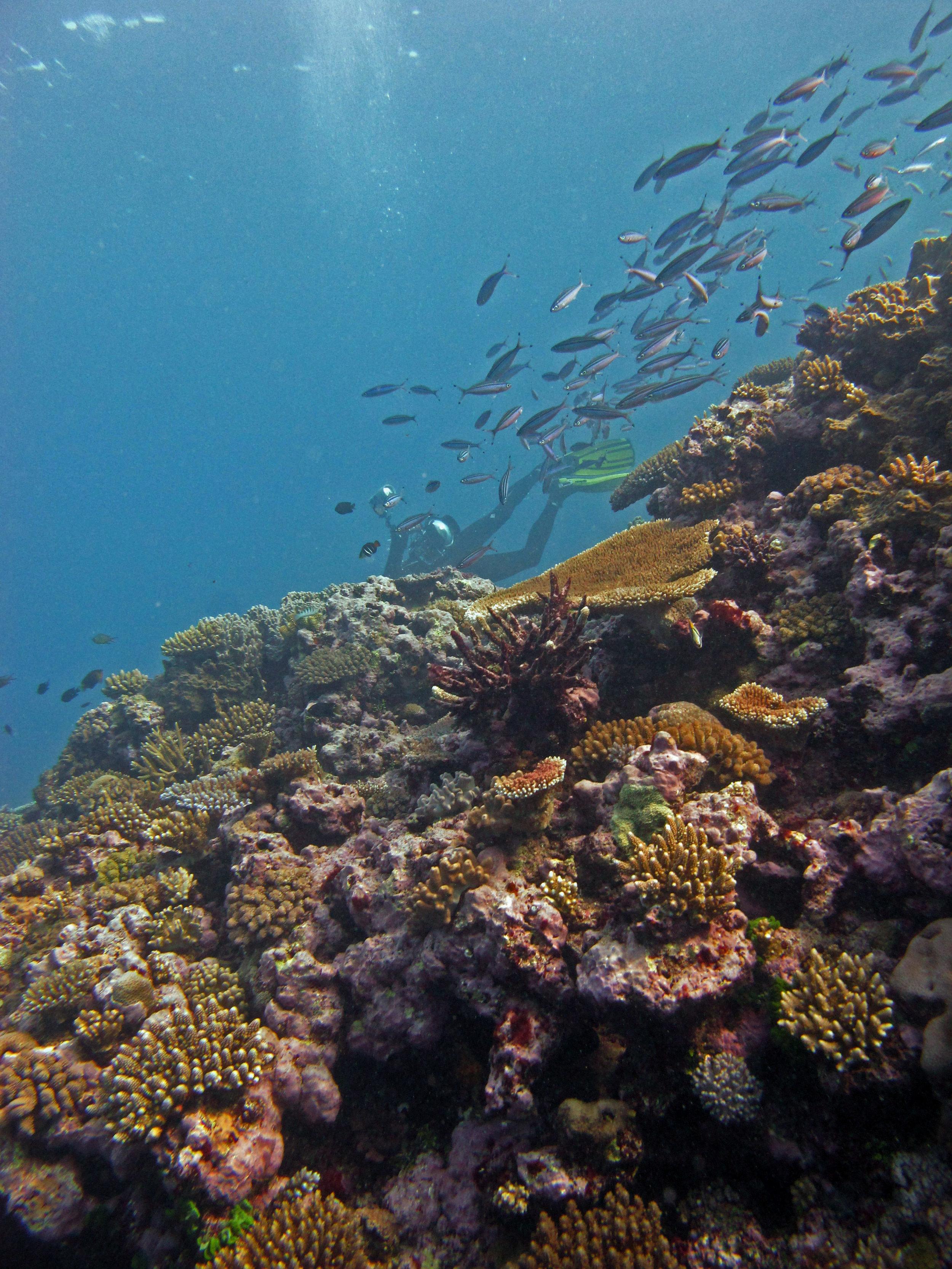 Fijian reefs.jpg