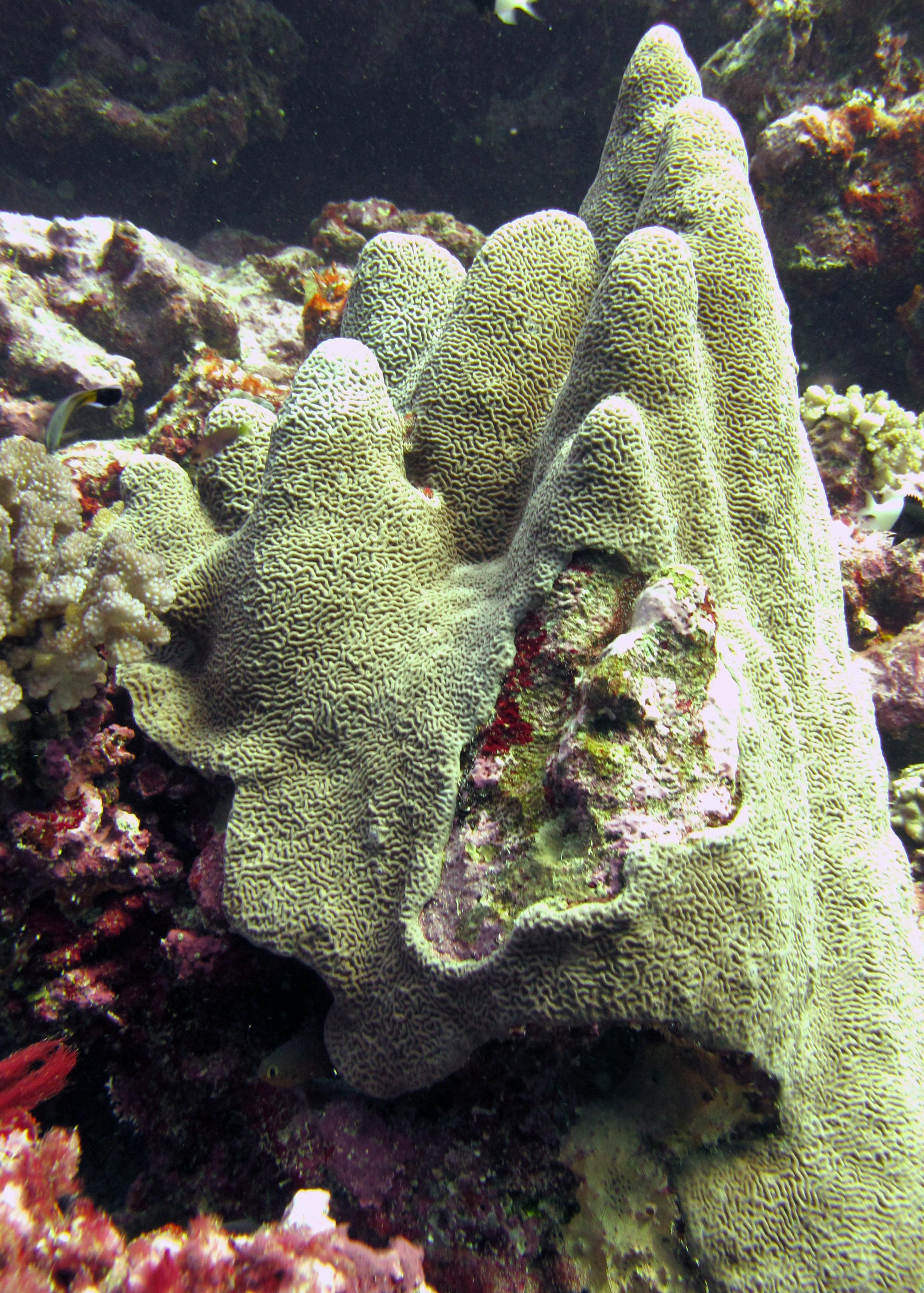 unknown species.jpg