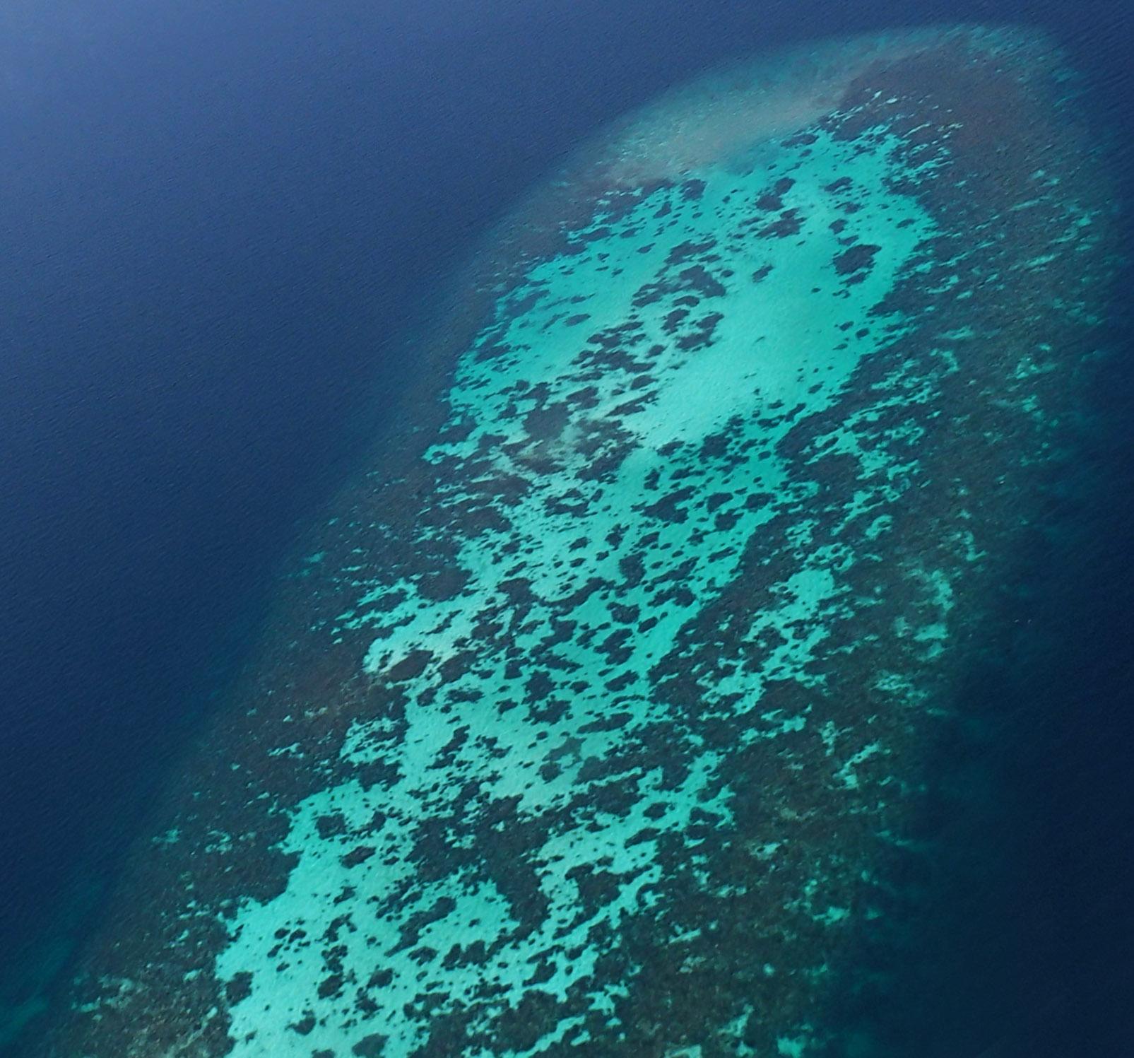 penis reef.jpg