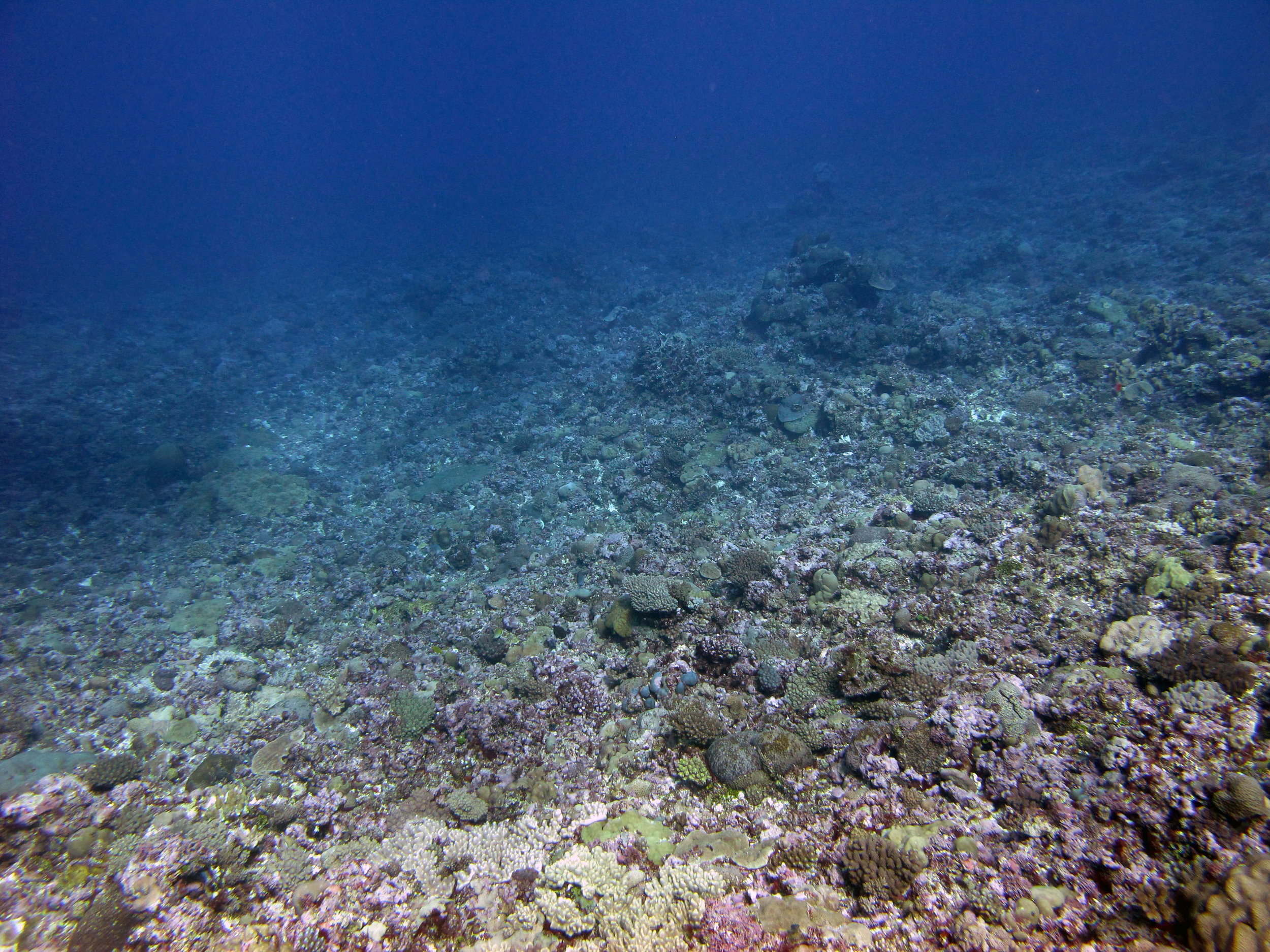 wonderful Fiji.jpg