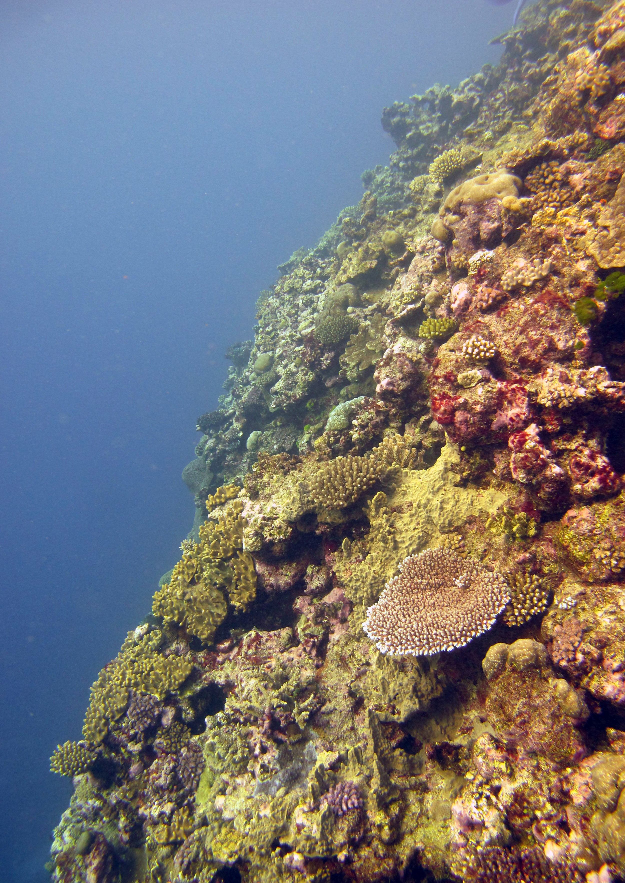 beautiful coral wall.jpg