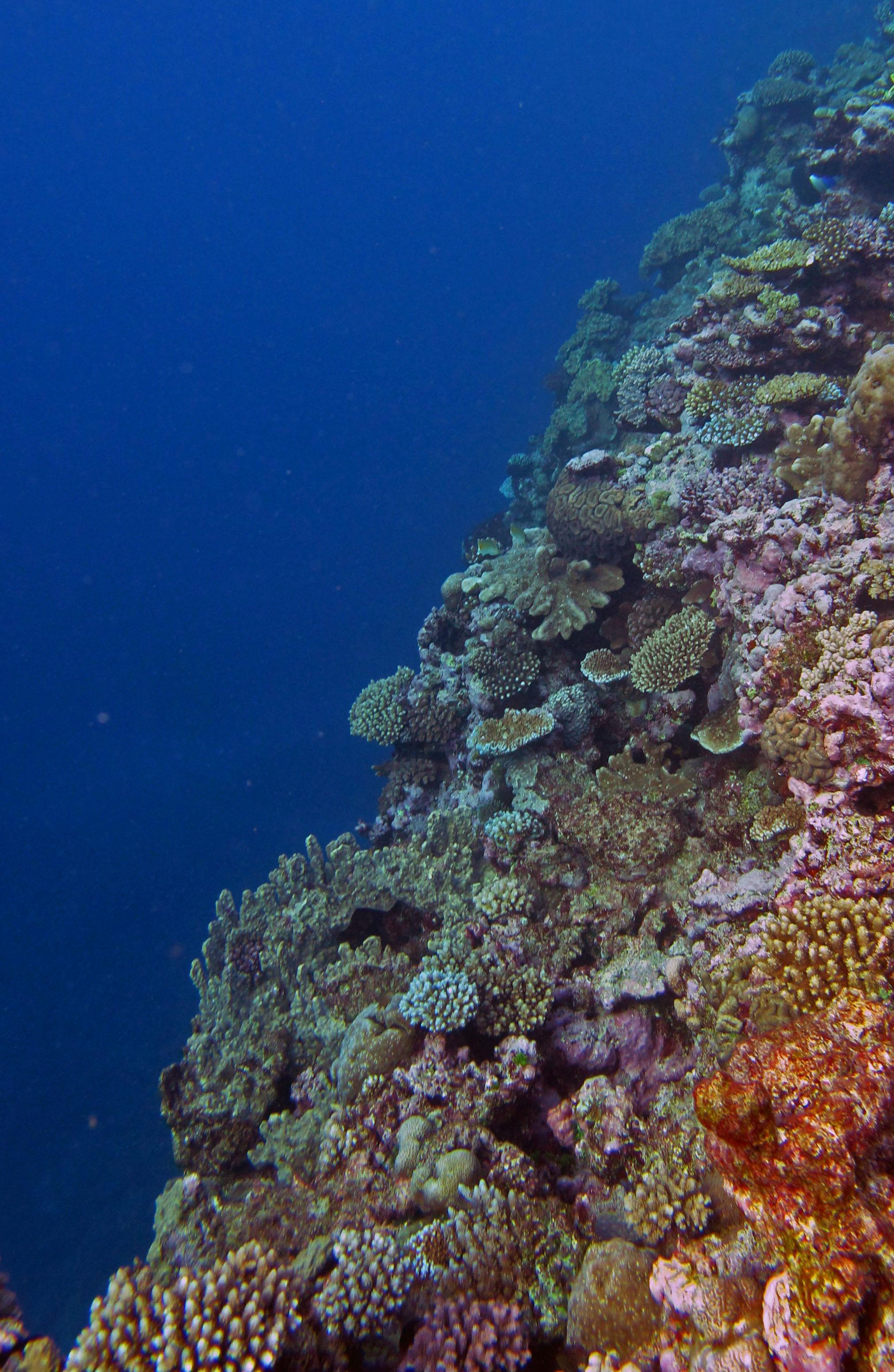 fun dive!.jpg