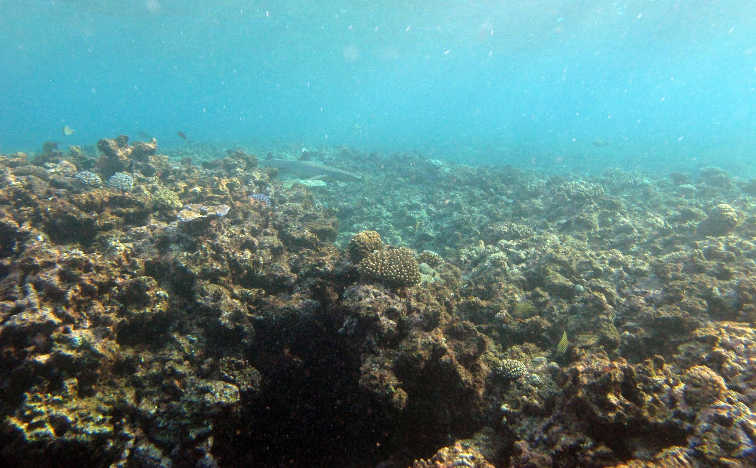 shark in the shallows 2.jpg