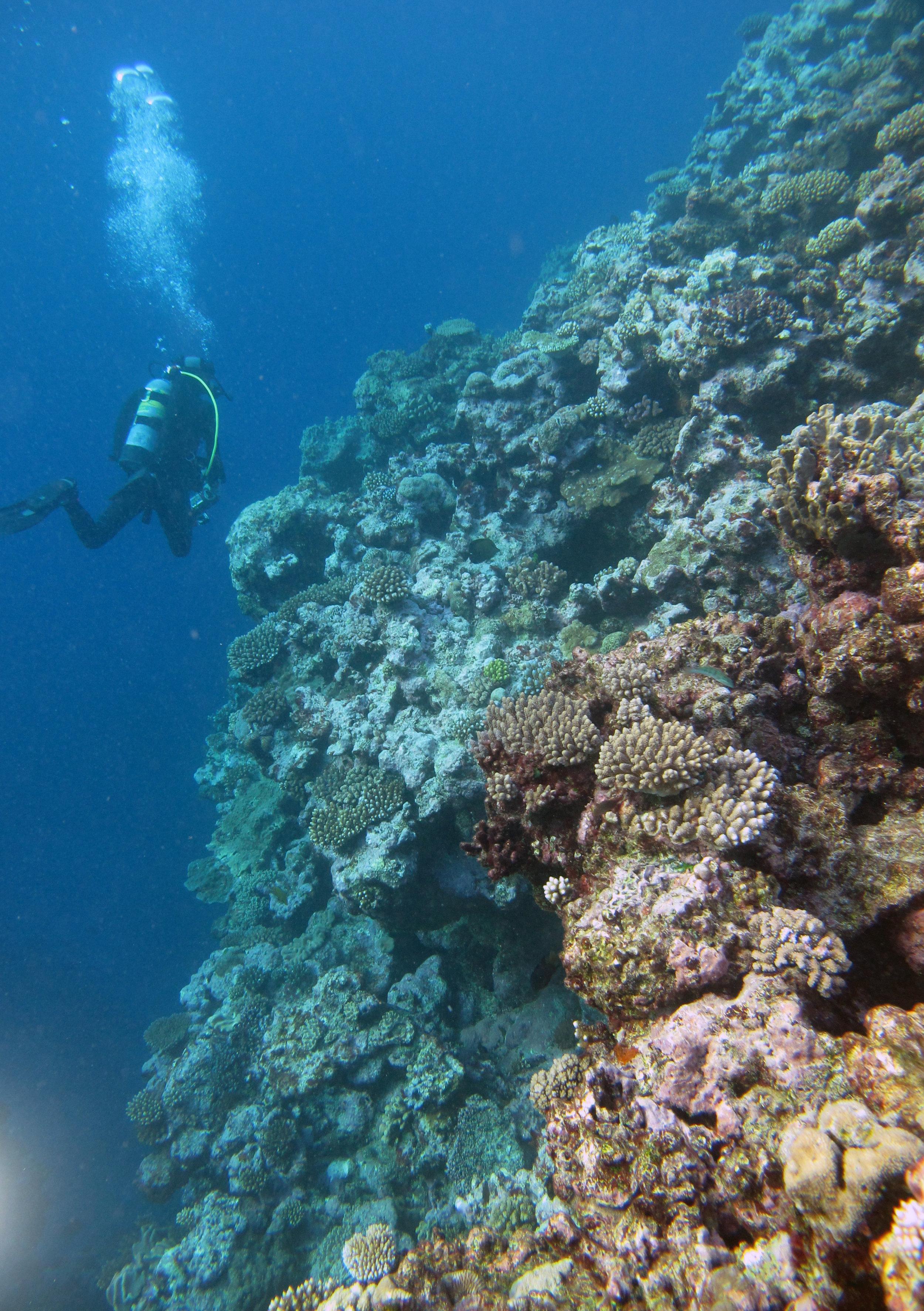 ridiculous diving.jpg