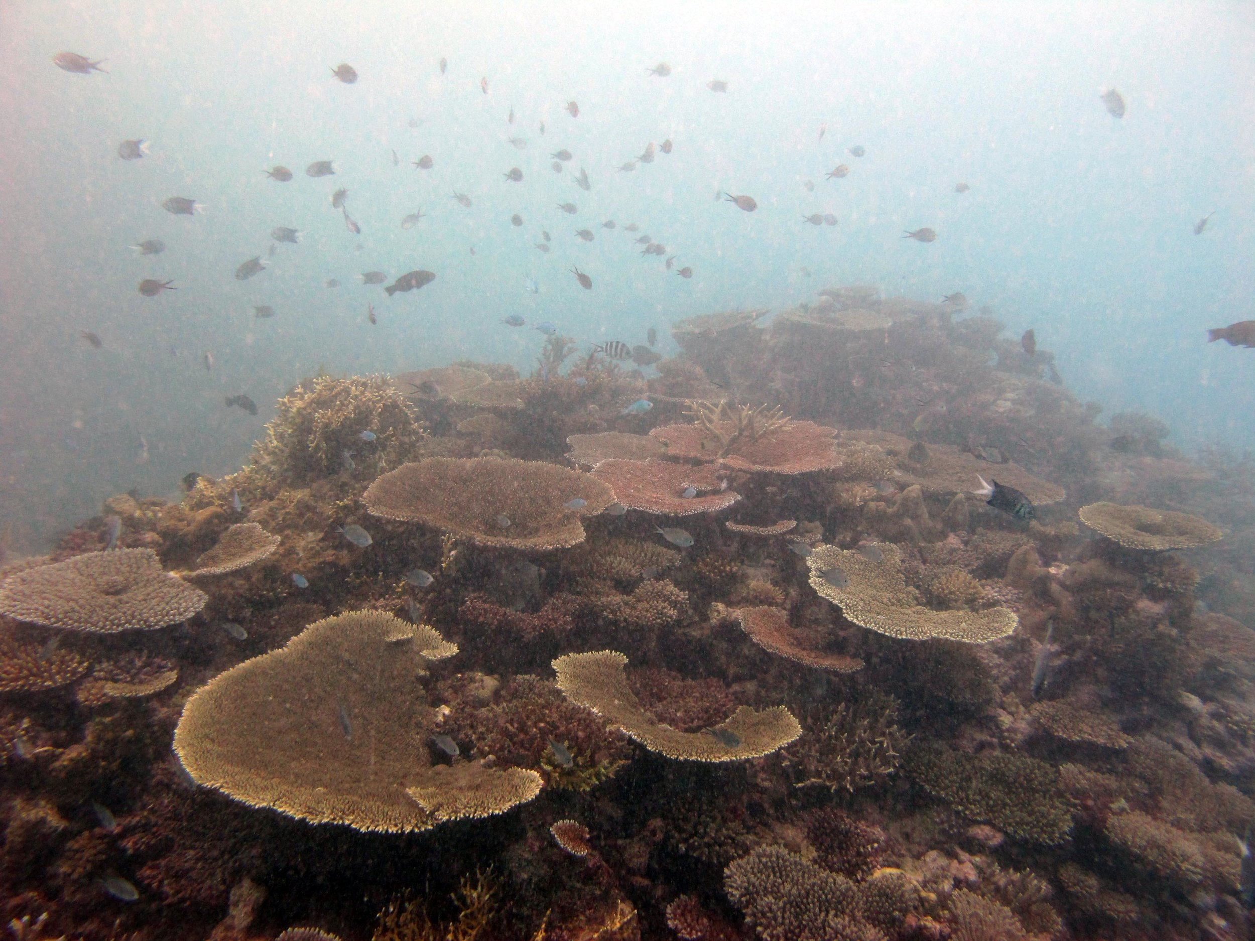 super turbid reef.jpg