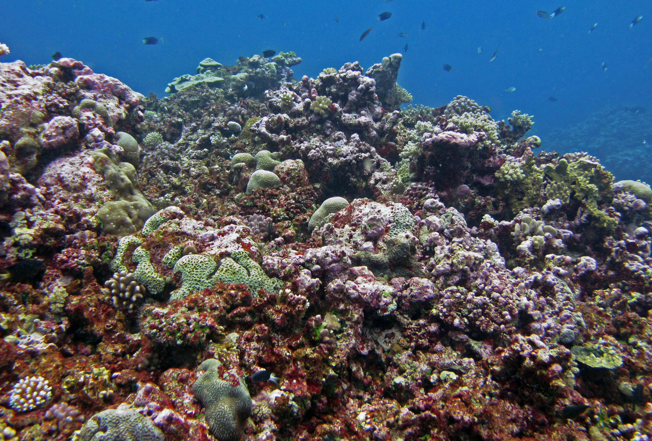 CCA and coral reef.jpg