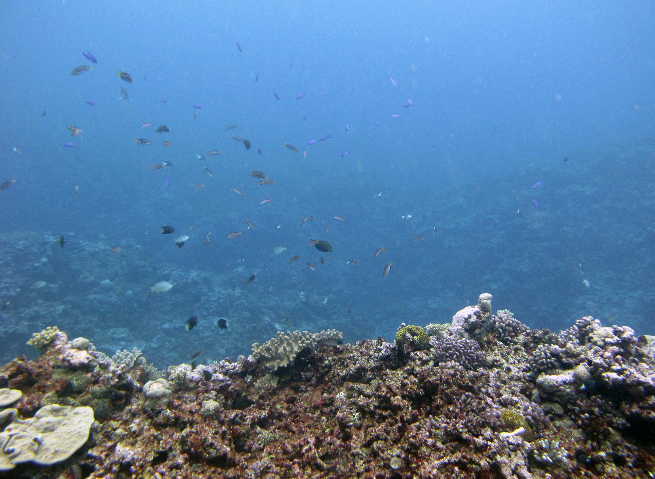 fish over reef.jpg