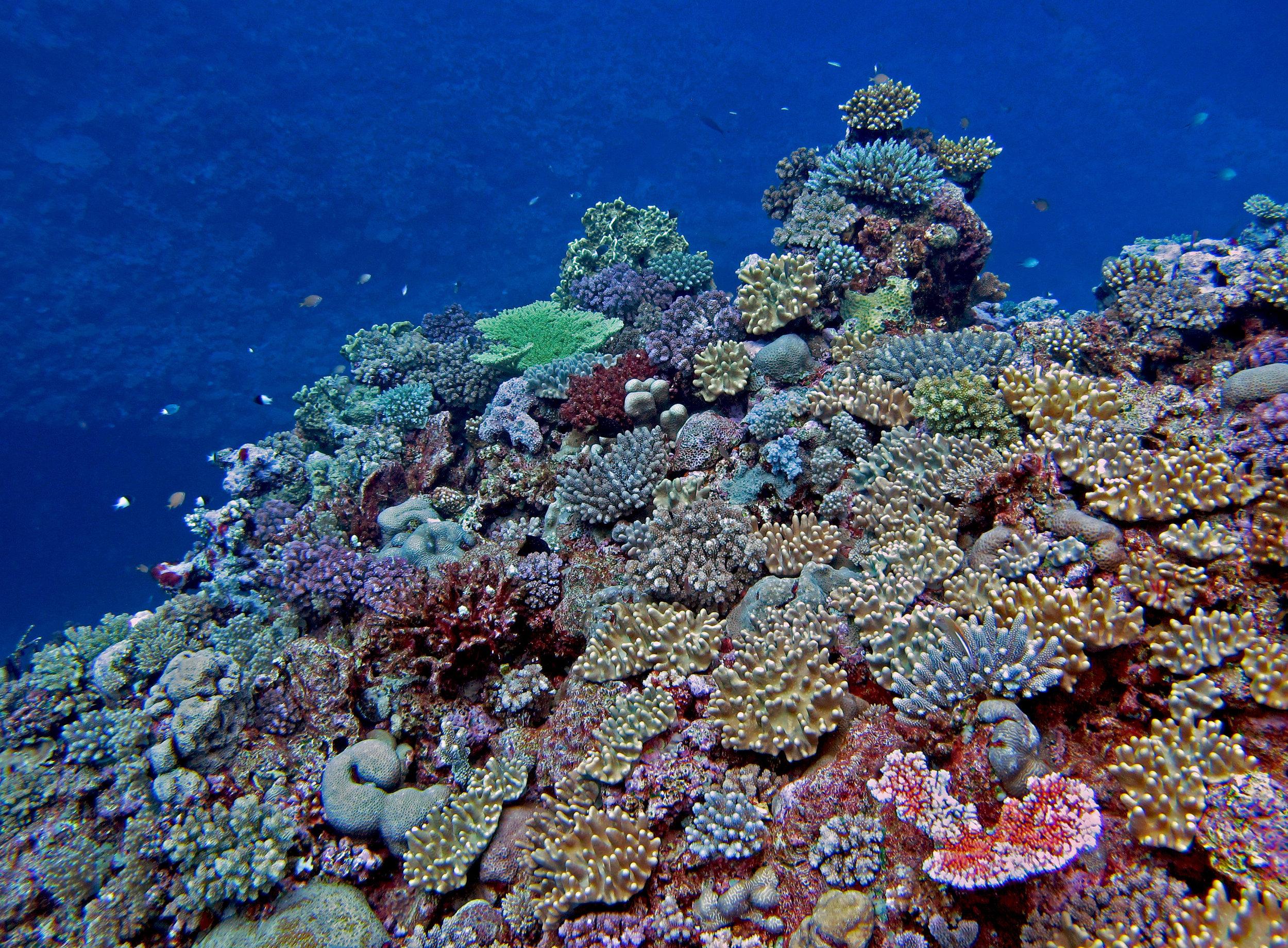 Taiwan-like reef.jpg
